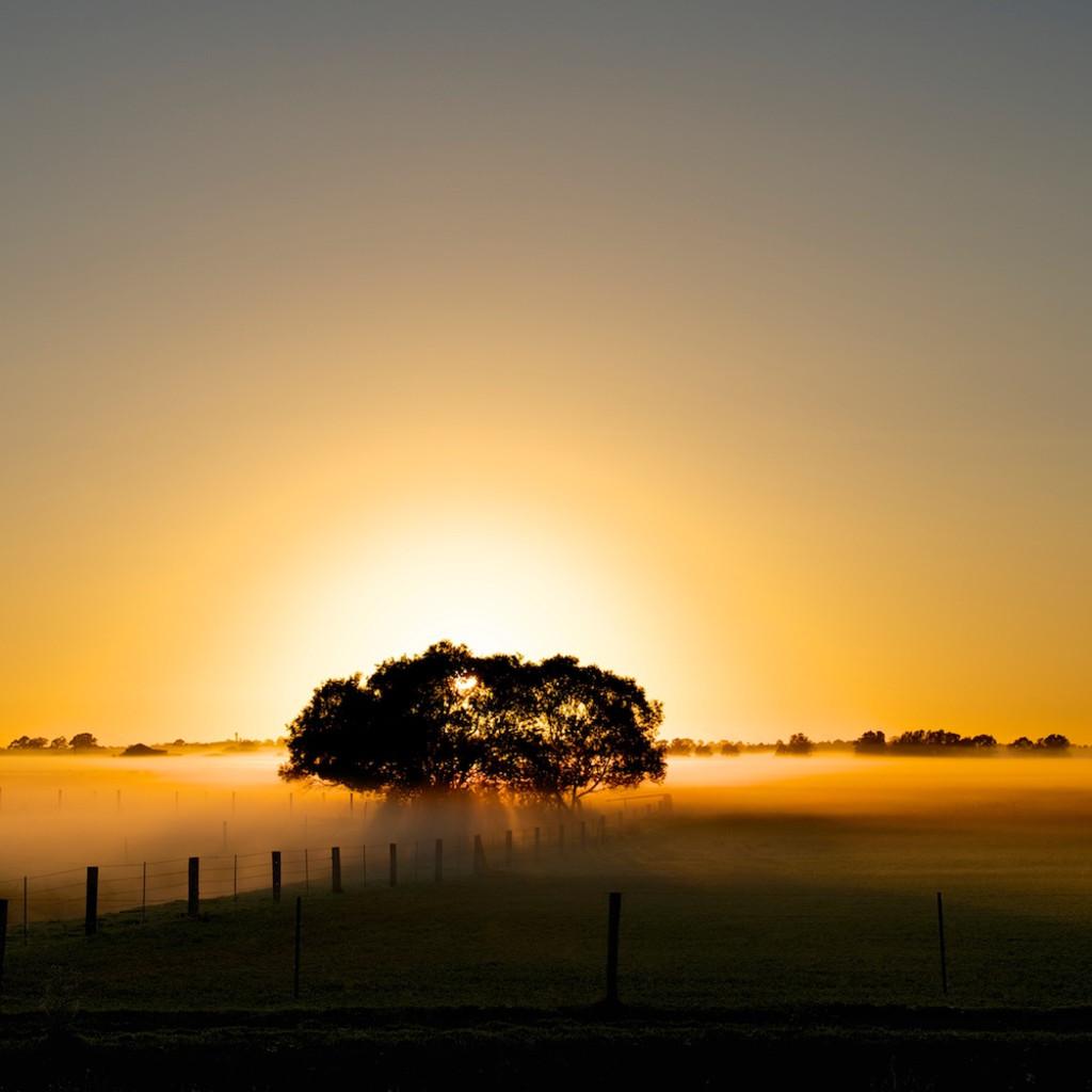 Bolwarra golden morning maitland hunter valley australia limited edition photo print scxcms
