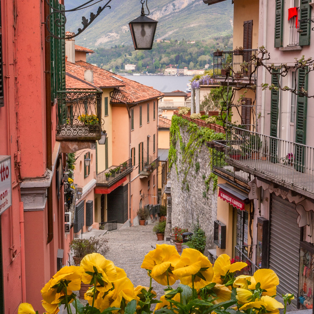 Bellagio bloom k7rutz