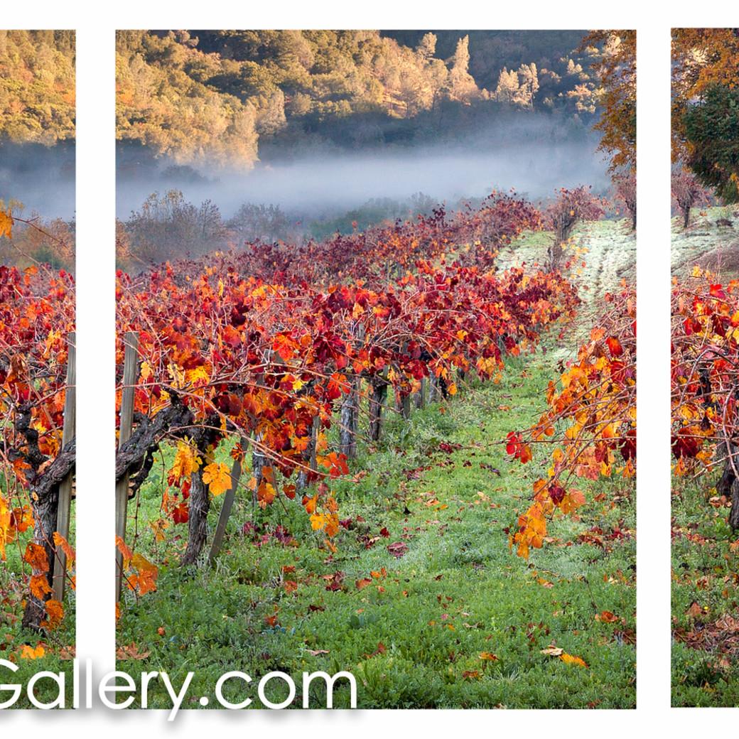 Autumn in calistoga all cbu6su