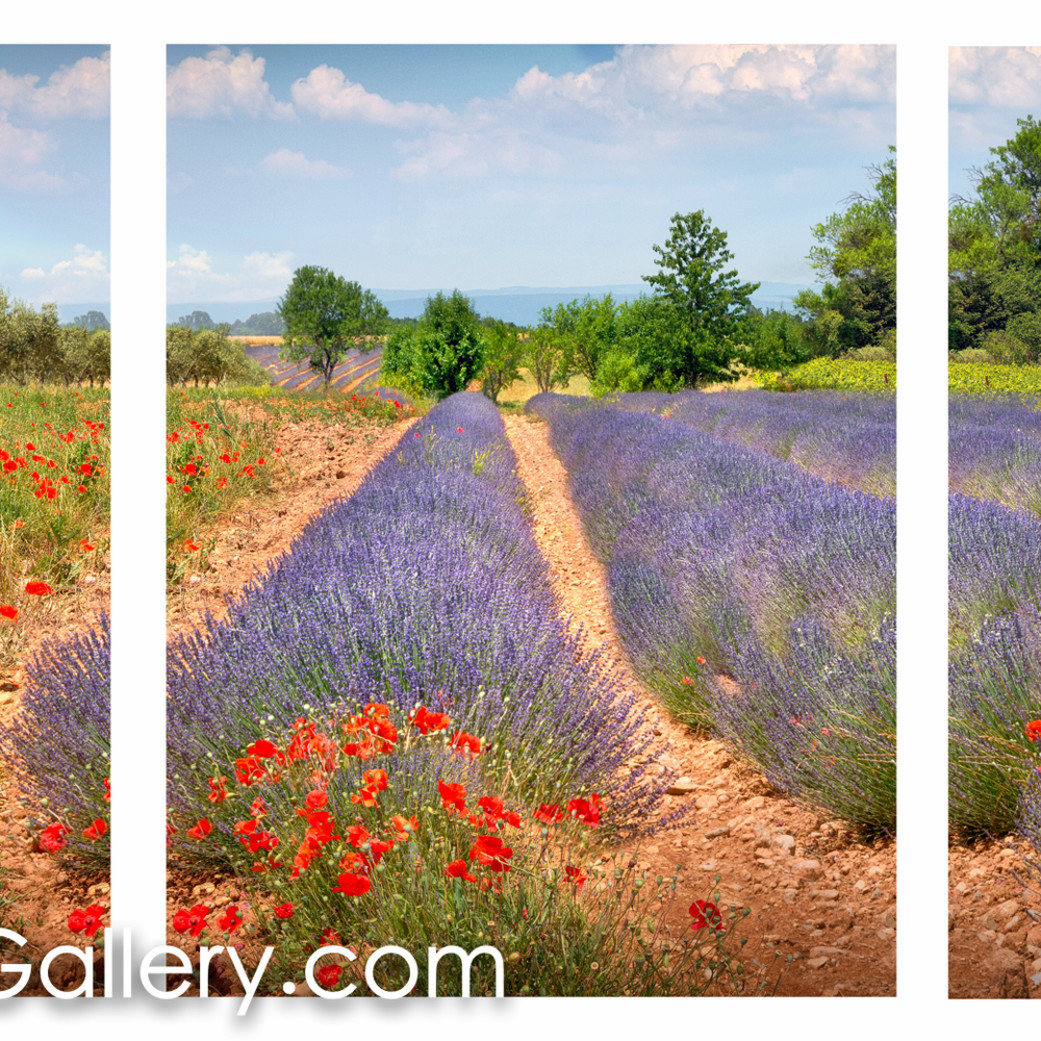 Flowered fields provence all lm6hmw