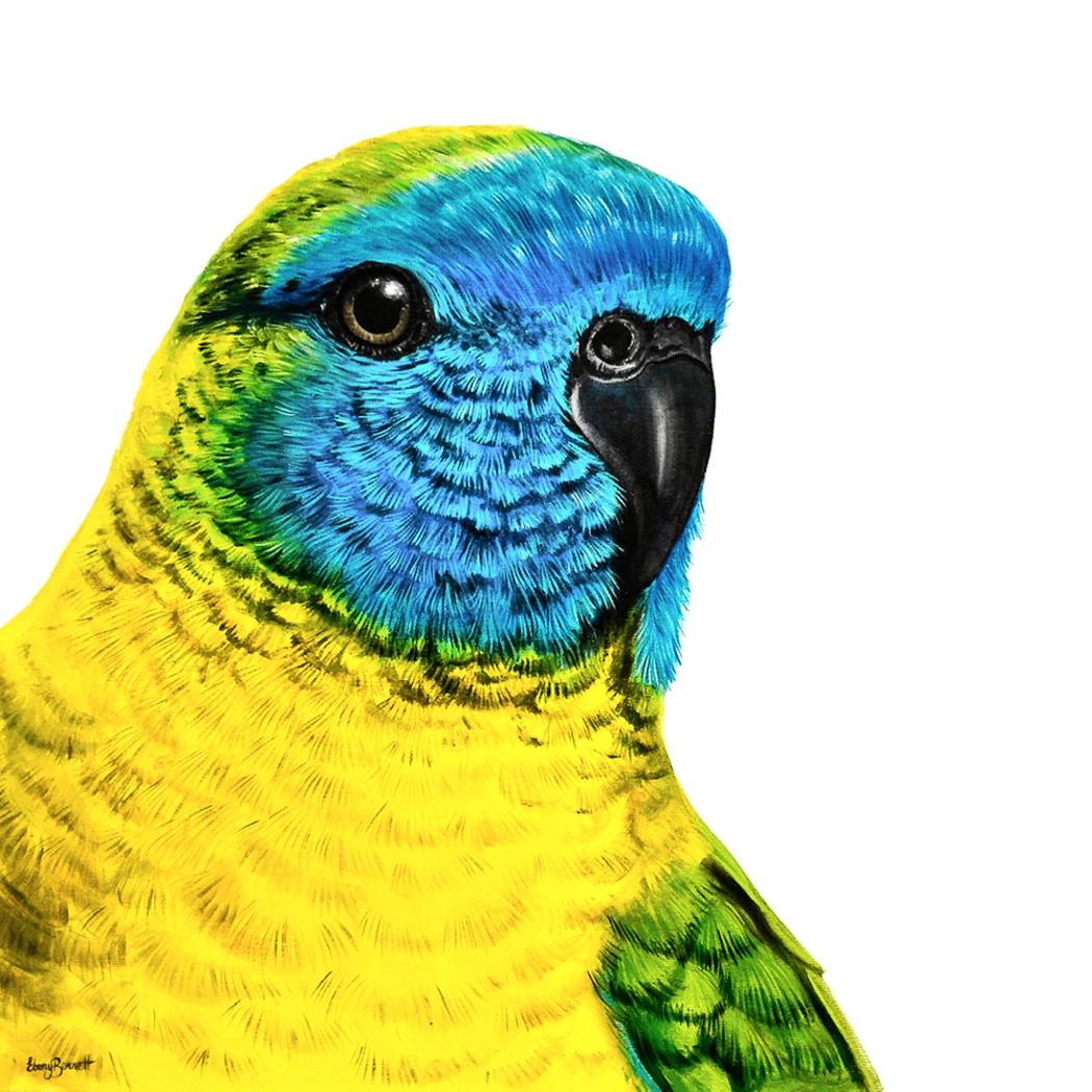 Tina turquoise parrot socialmedia colouradjust ccmlpg