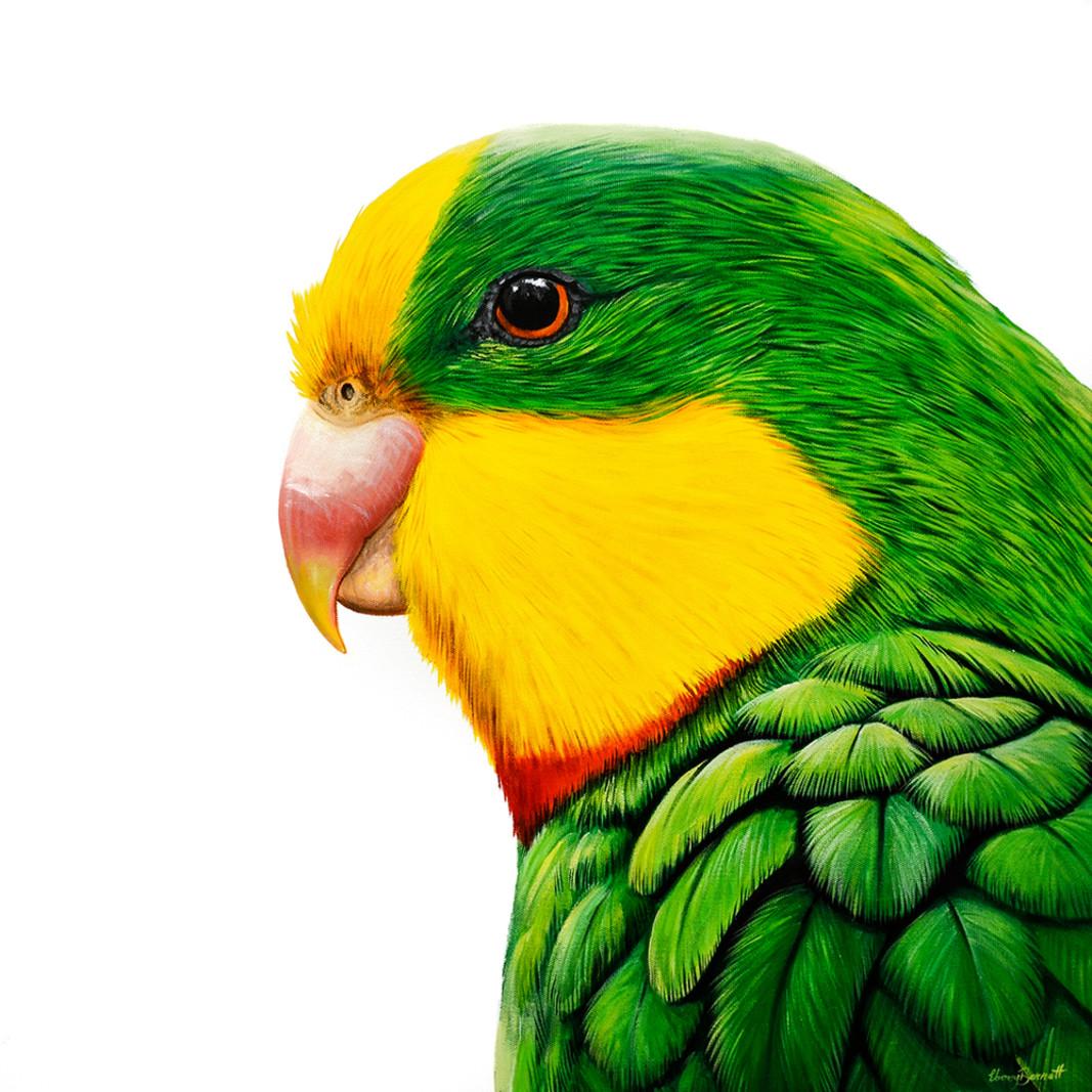 Sunny superb parrot socialmedia kflayh