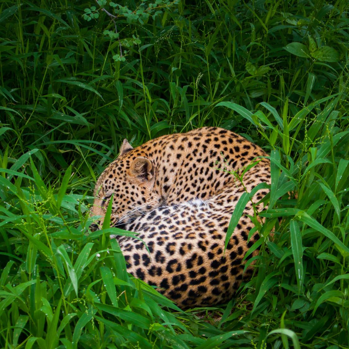 20101215 sleeping leopard p1020861 youyqq