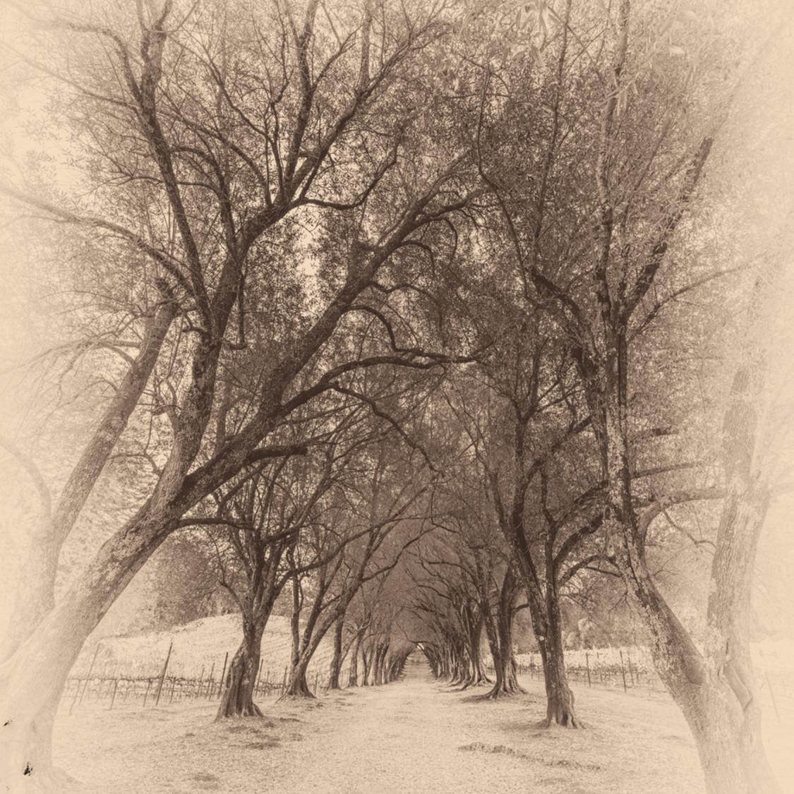 Ancient grove ii hhkpii