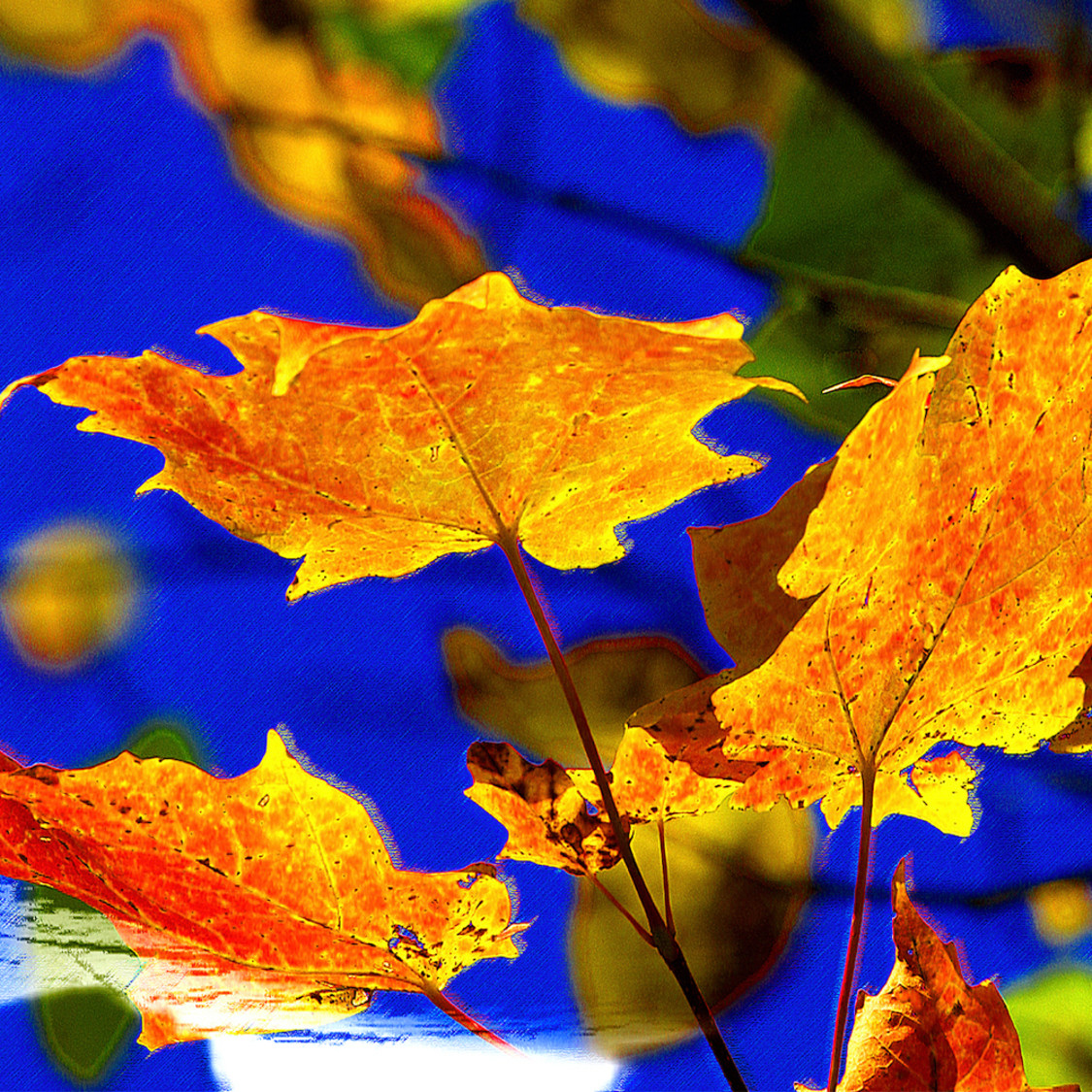 Autumn leaves t77uwl
