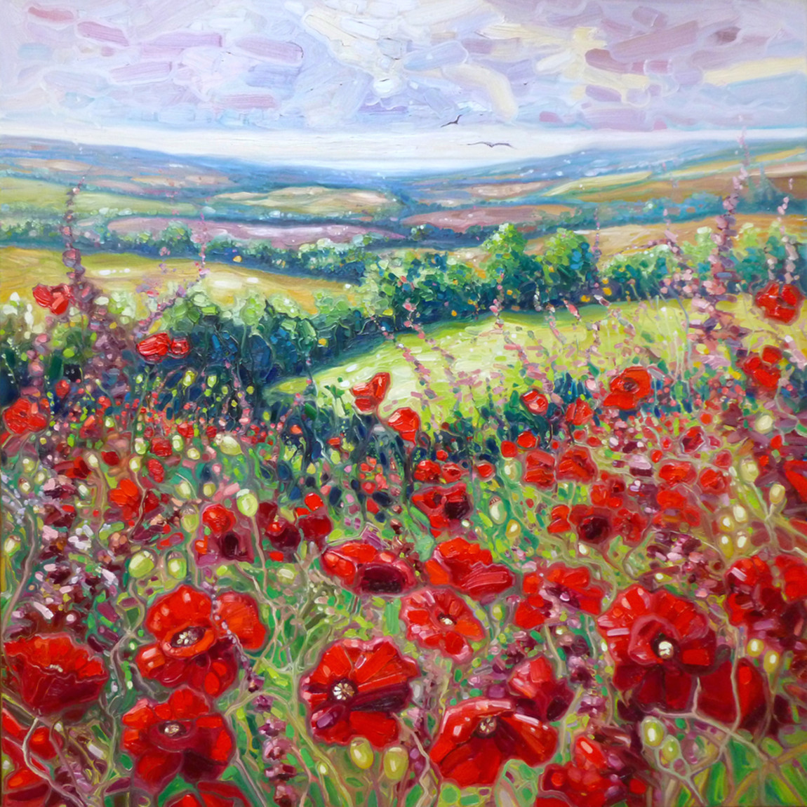Summer poppies in a sussex meadow 72 oiovmb