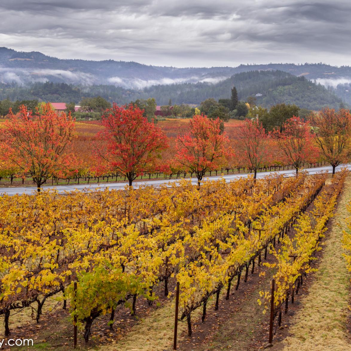 Trinchero autumn xiqgvu