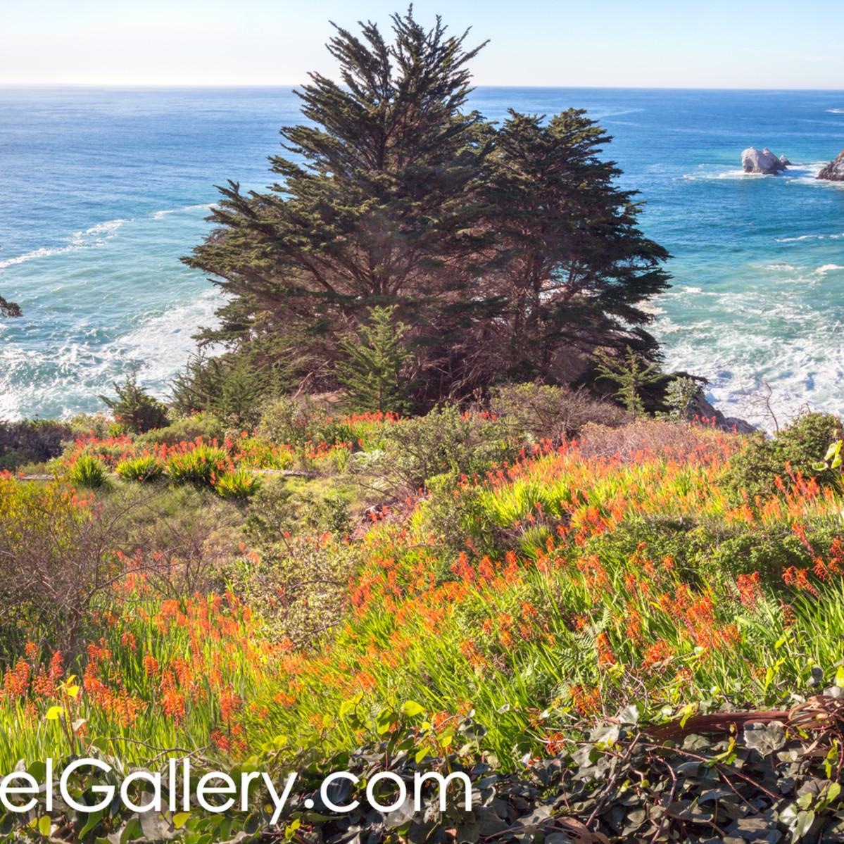 Wild bloom california coast ba98qy