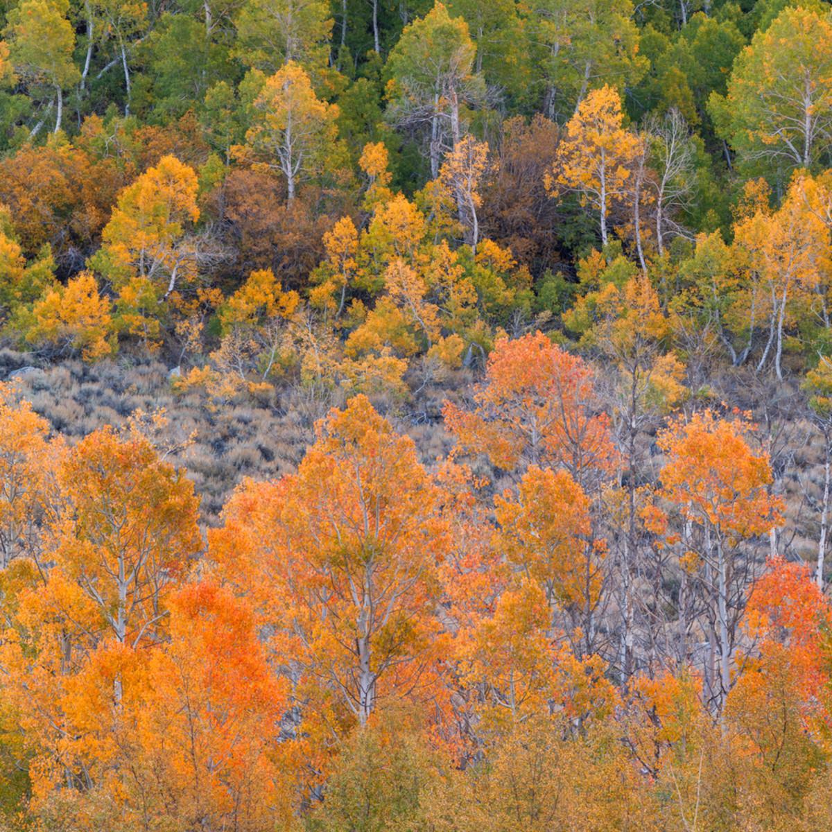 Autumn glow high sierra xaeo7r