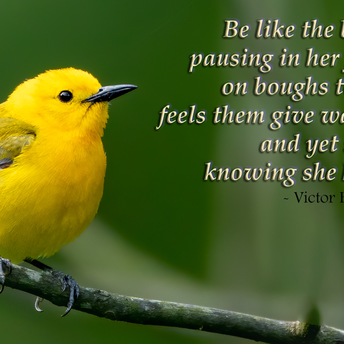 Be like the bird..knowing she hath wings 1 h5vm98