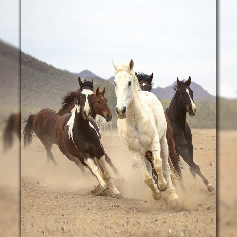 White horse run v mg 2282 3d 23 iegzky
