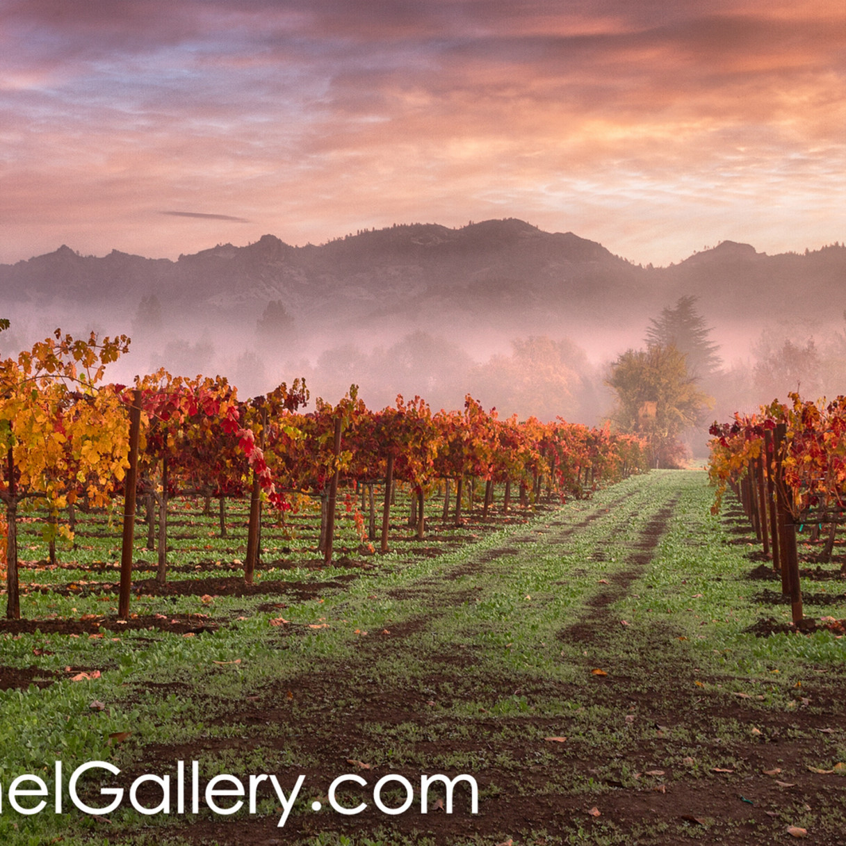 Autumn sunrise calistoga rkhowf