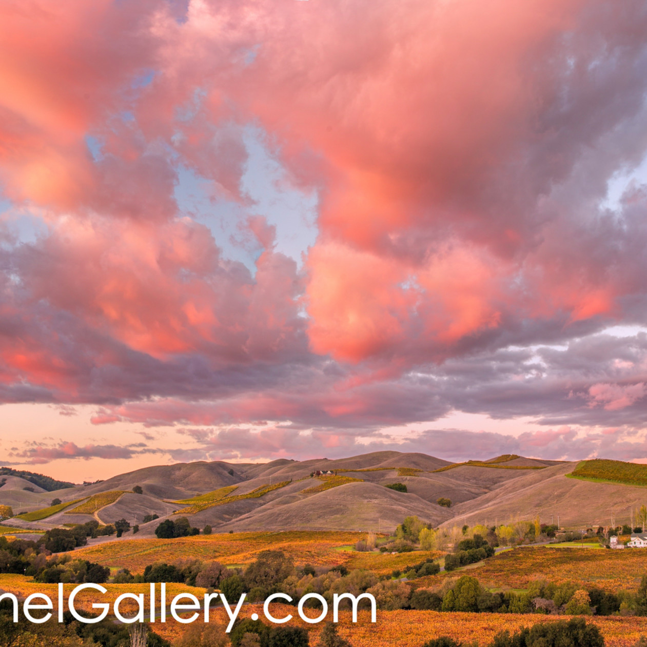Wine country sunset lcbsvw
