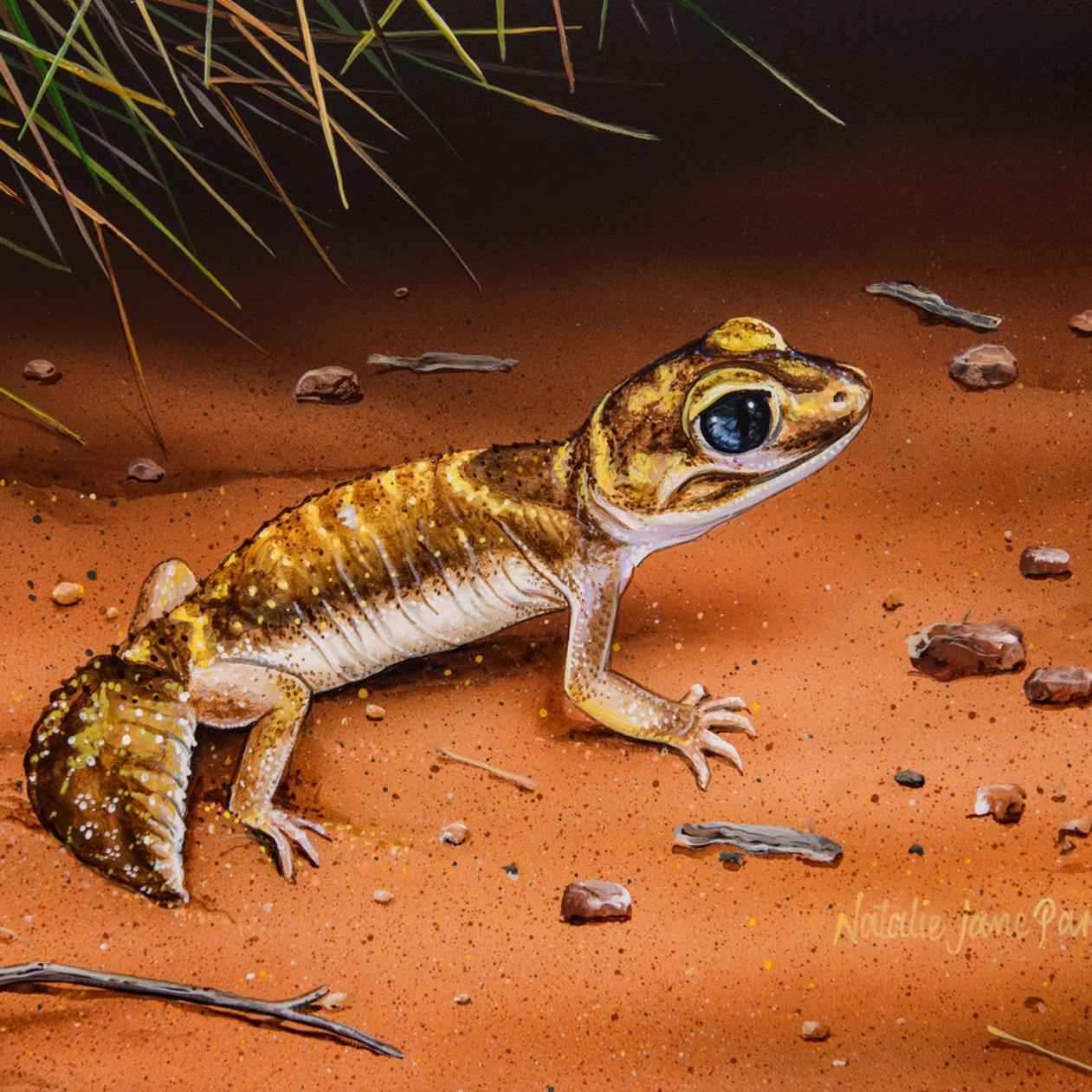 Desert dweller   west coast three lined knob tailed gecko natalie jane parker australian native wildlife giv261