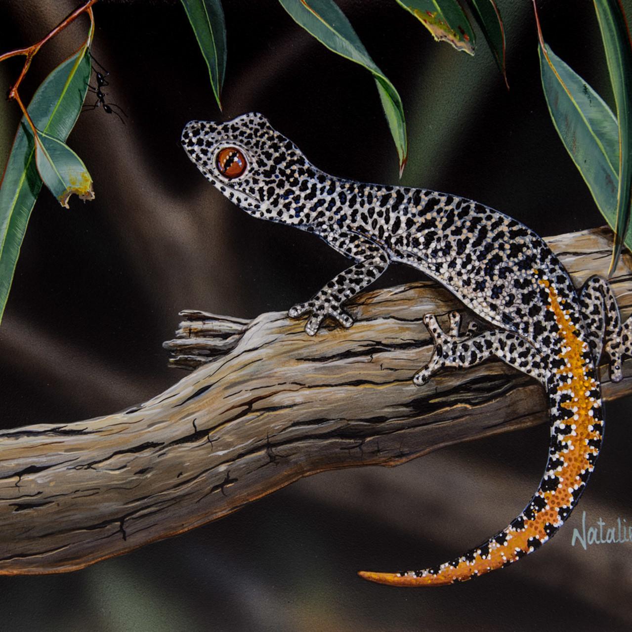 Hello gecko   golden tailed gecko natalie jane parker australian native wildlife intcap
