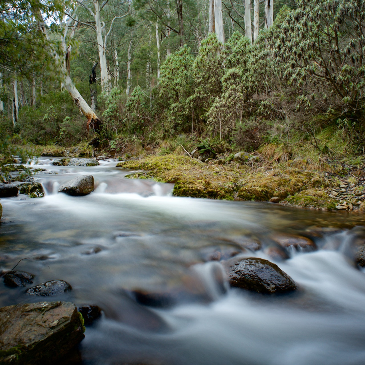 Alpine flow leatherbarrel creek khancoban kosciuszko national park nsw australia dvefnq