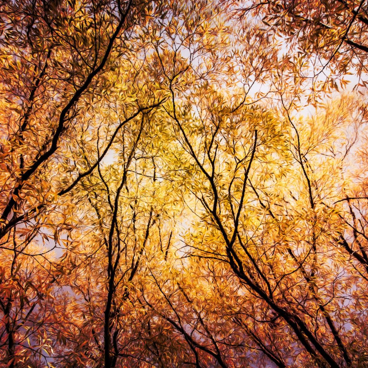 Autumn in arrowtown   queenstown lakes district south island new zealand samantha taylor tgvz6k