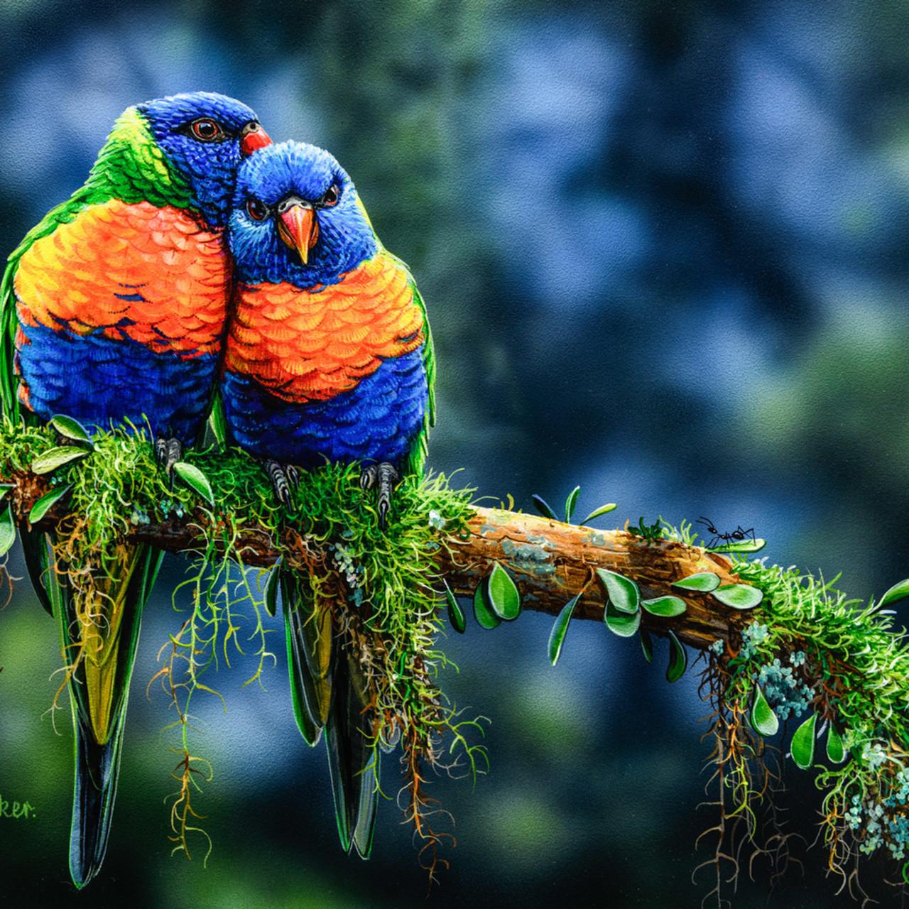 Morning snuggles   rainbow lorikeet natalie jane parker australian native wildlife ahjelc