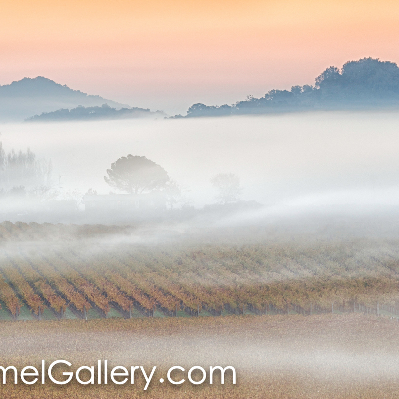 Sunrise fog zvksod