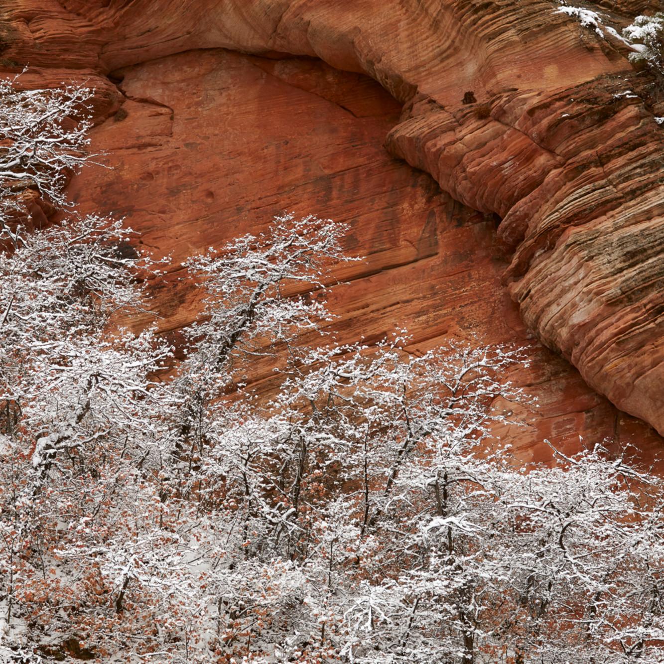 Frozen trees along pine creek 3x2 h0u4l5
