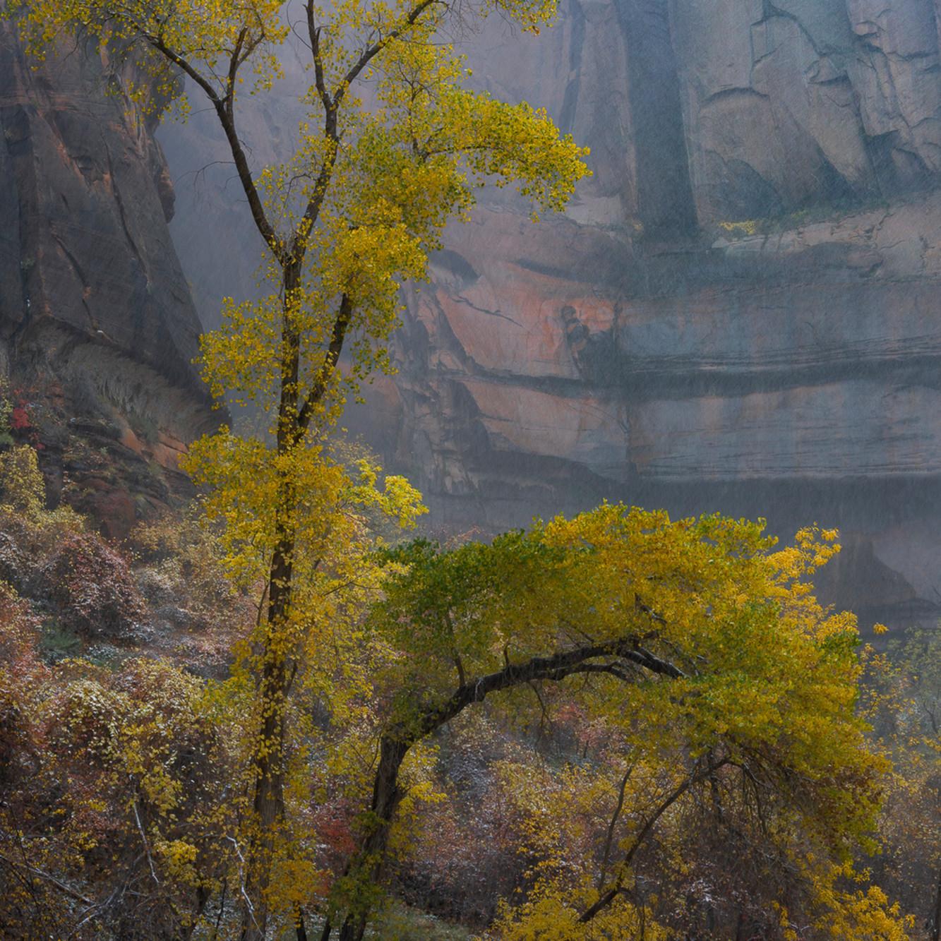 Yellow tree 7200 foc 2x3 ui7zq1