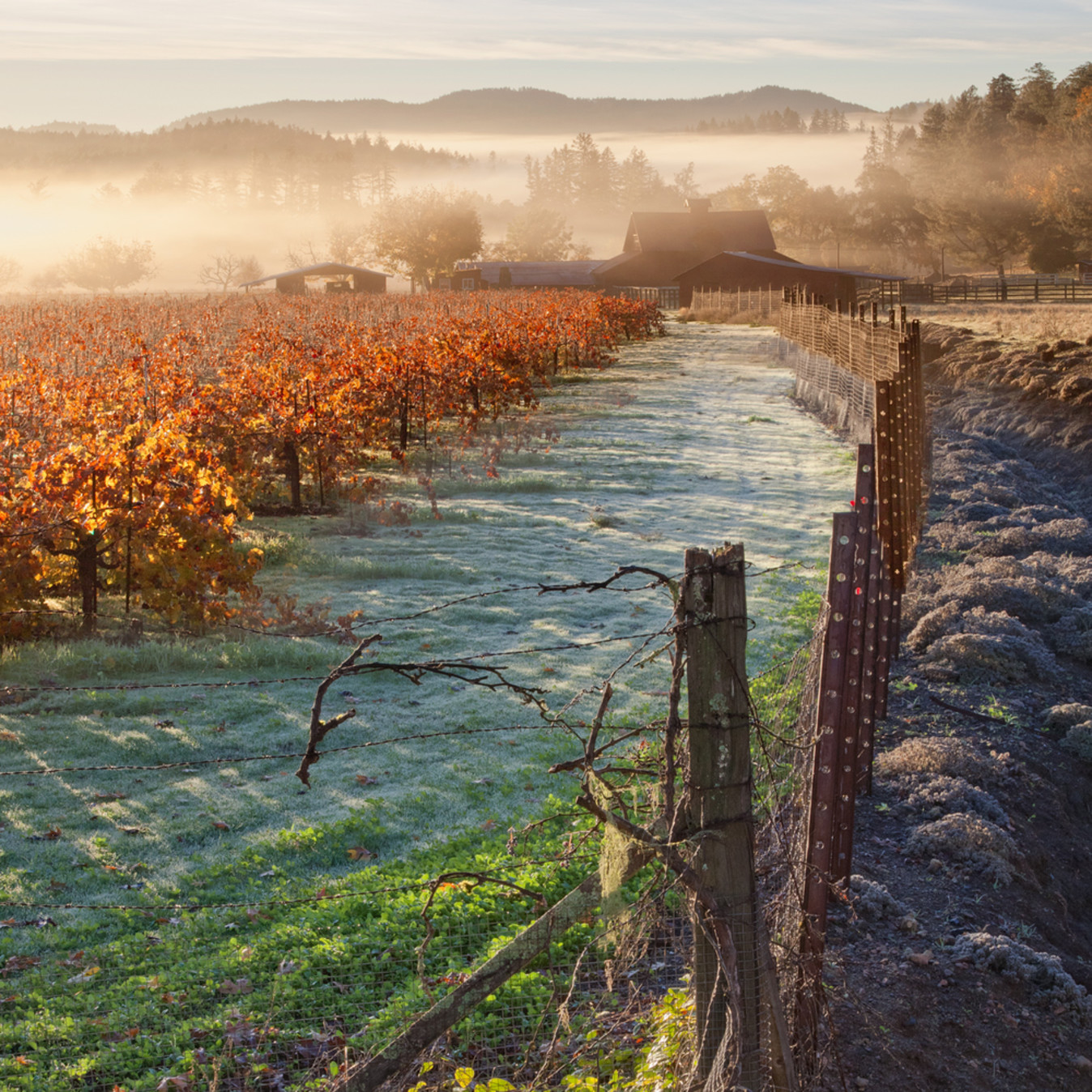 Autumn frost napa vjjd4x