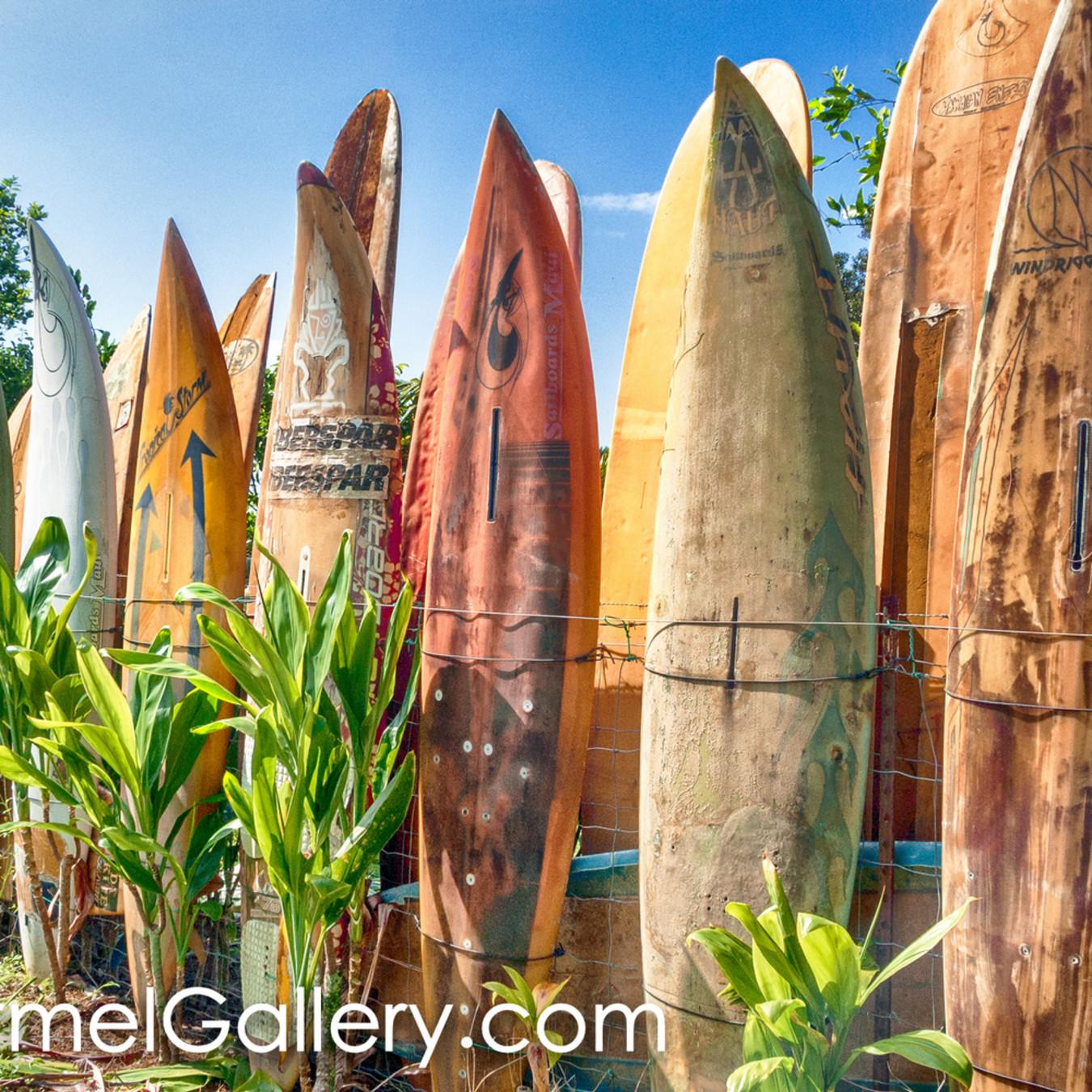 Surfboard shimmer slj99i