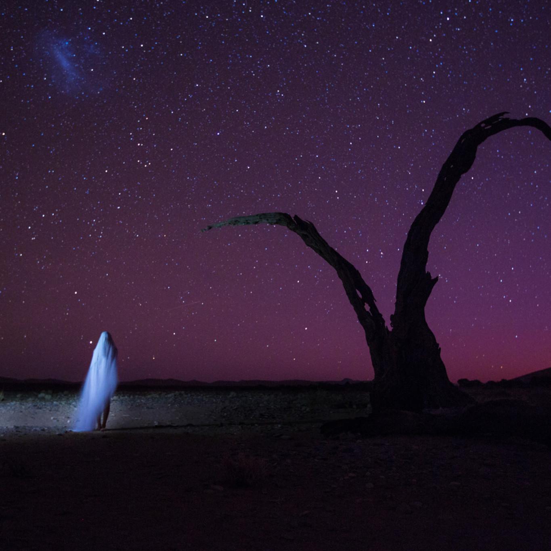 07 clayton woodley dimorphotheca pluvialis shot in namibia qaqvhd