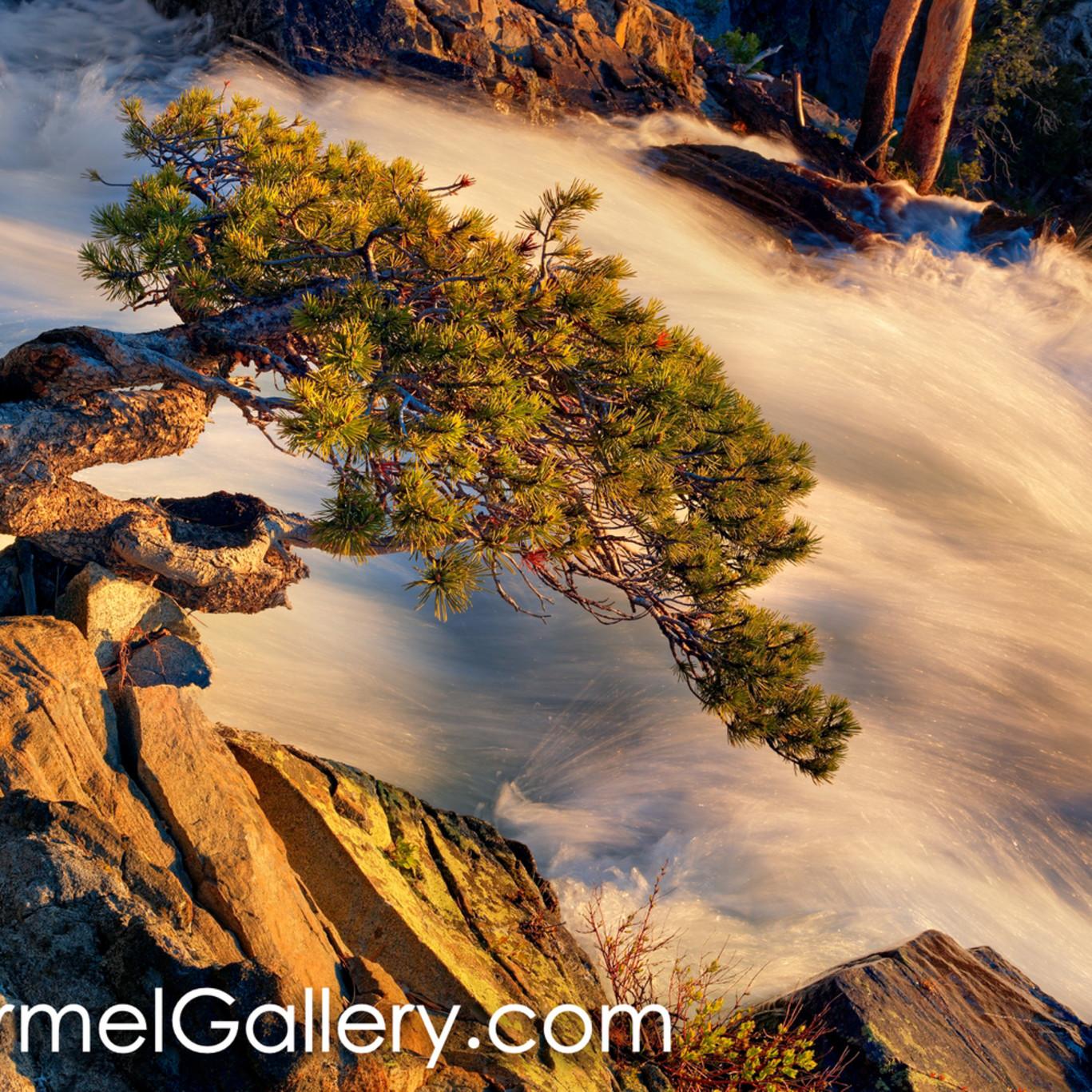 Wild bonsai at sunrise amkrjw