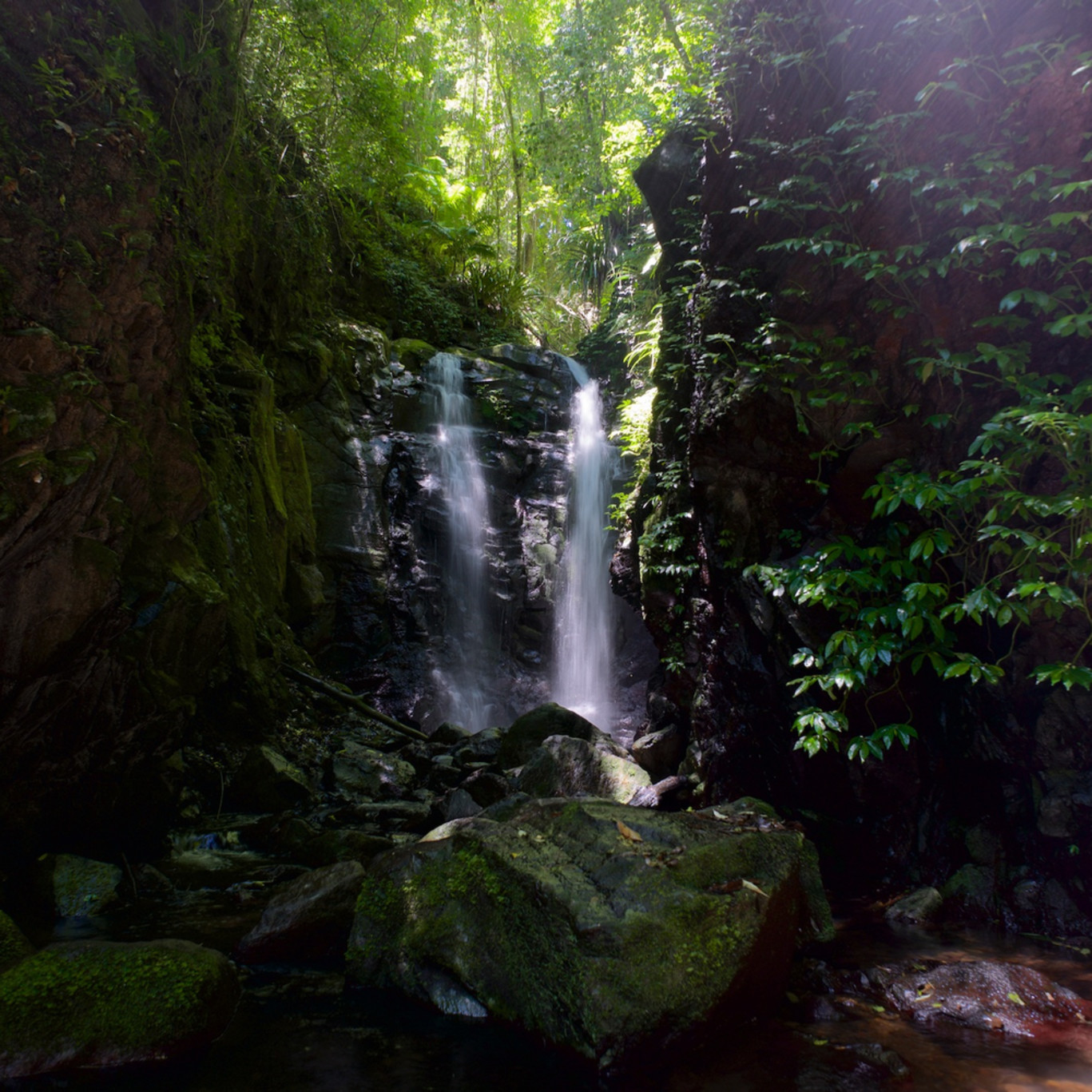 Green with envy box log falls waterfall lamington national park qld australia jcthjg