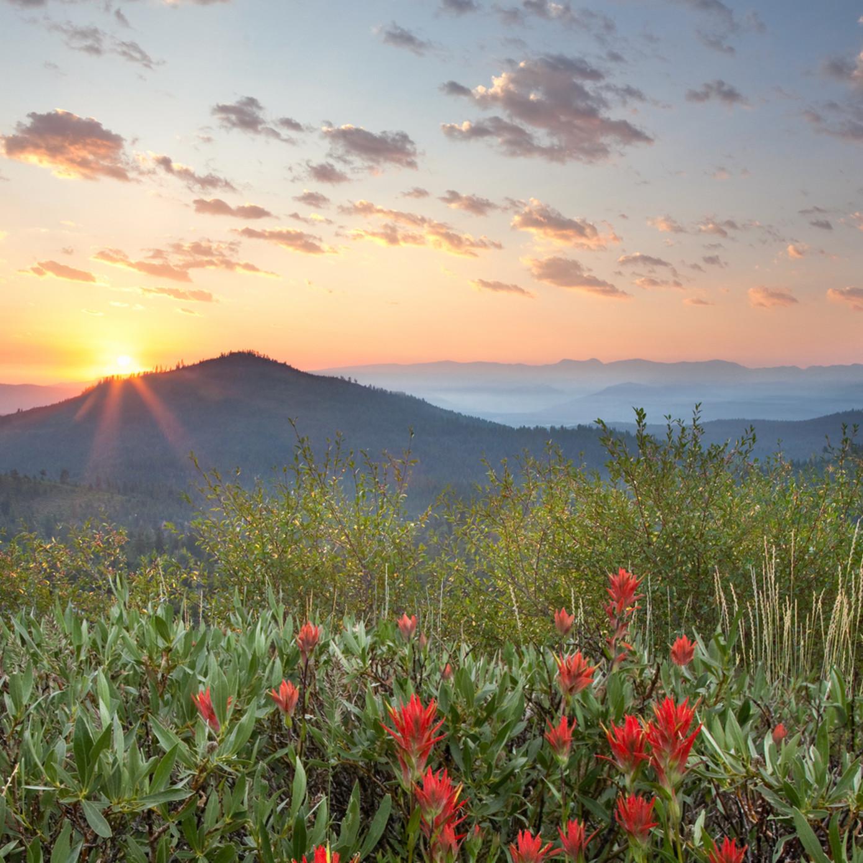 Sunrise mount rose n07yeh