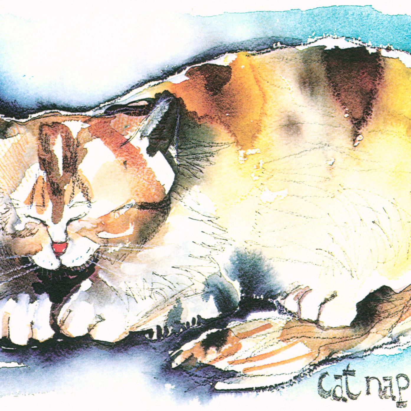 Cat nap wcu8am
