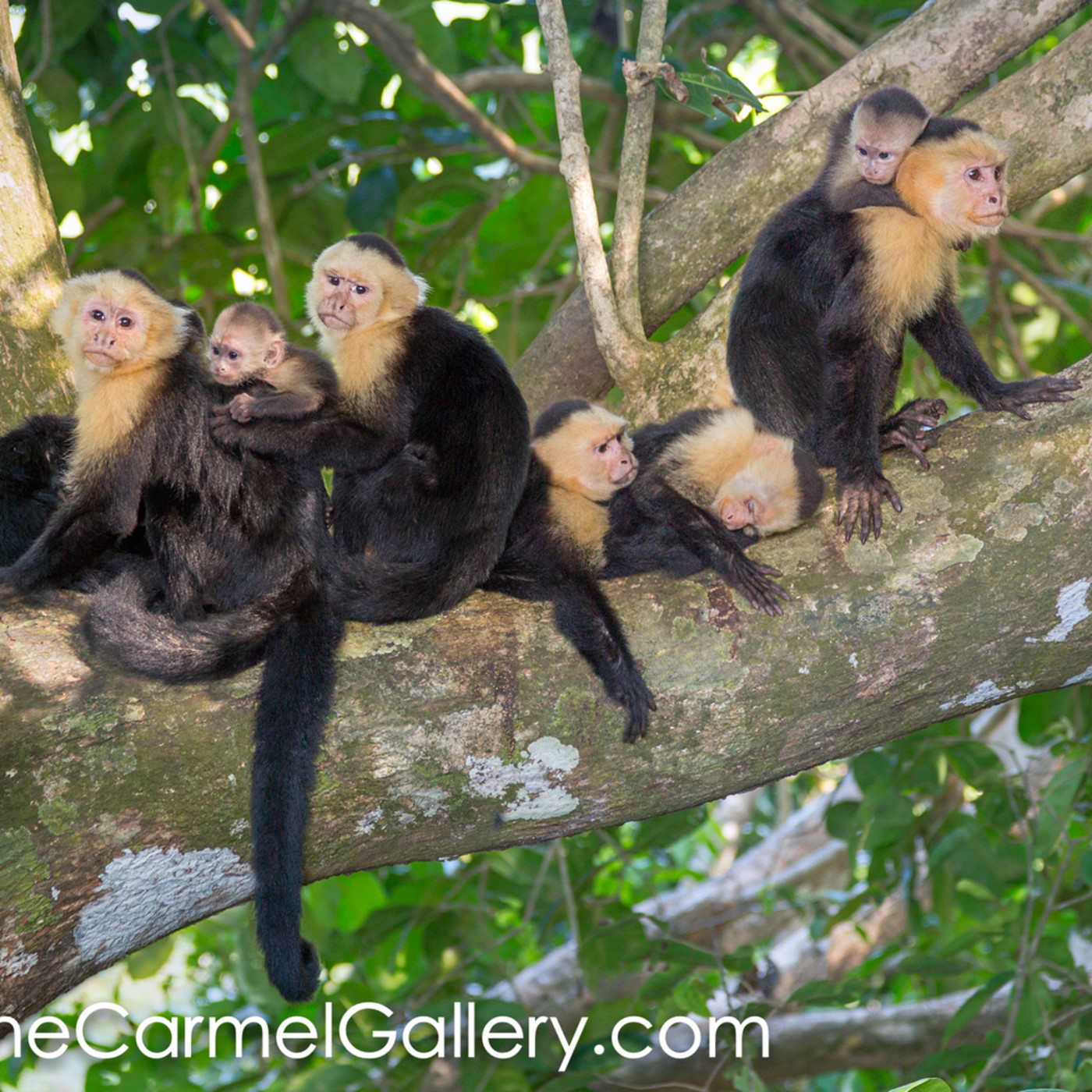 Rain forest monkey family lf6fns