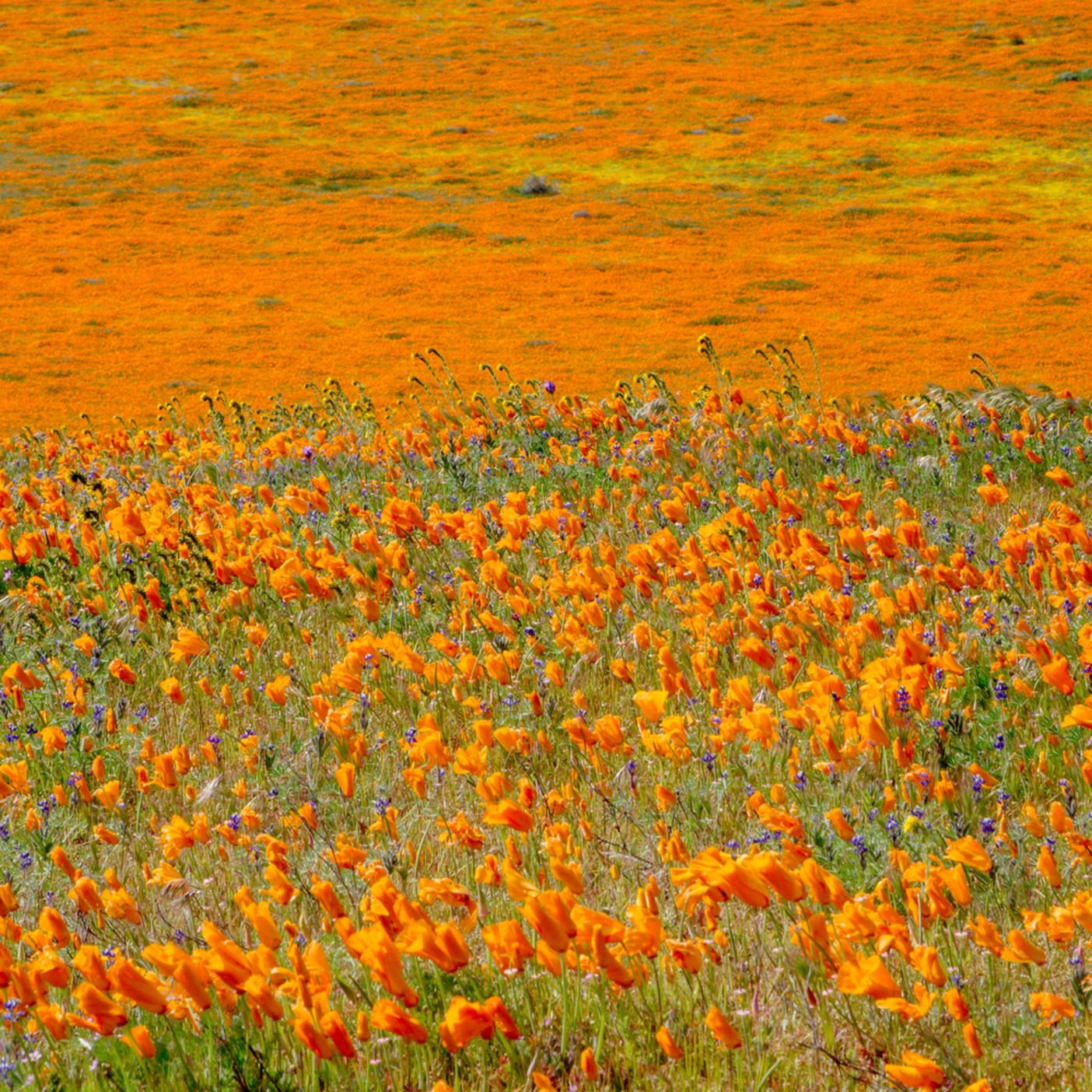 Wildflower wind xdkani