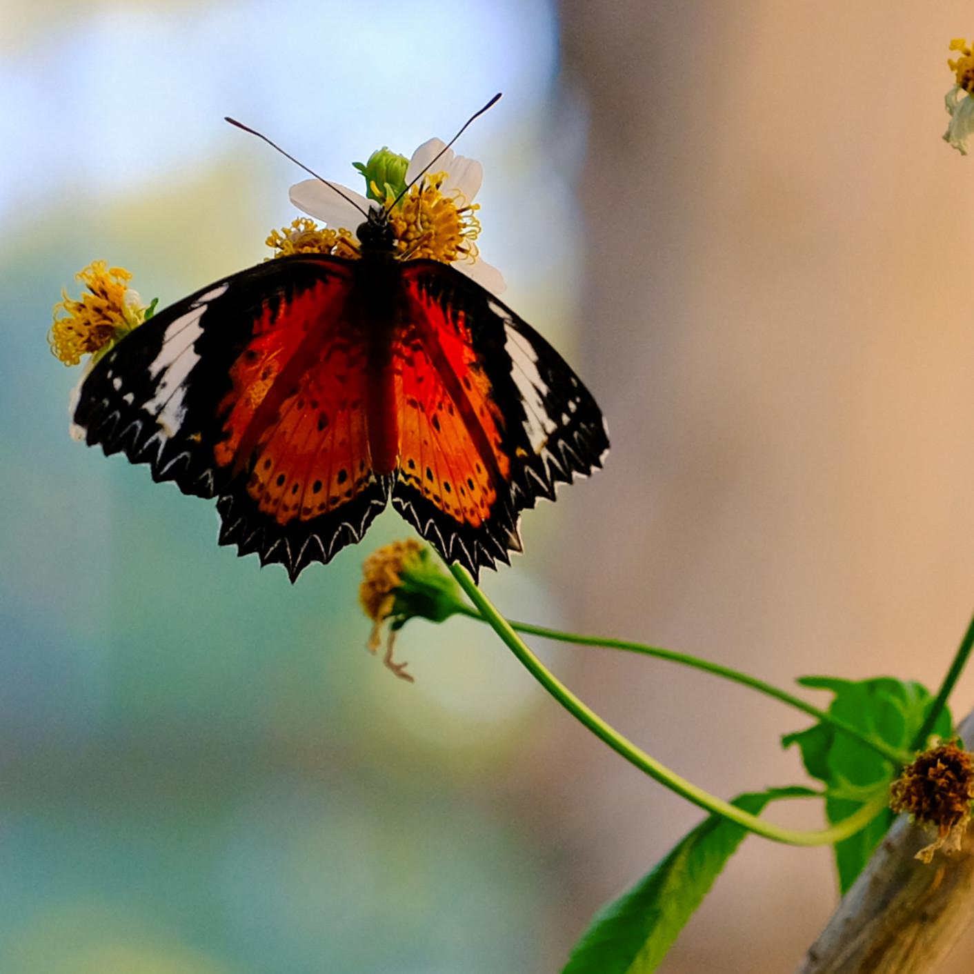 Flowers and butterflies 59 sjwmcp