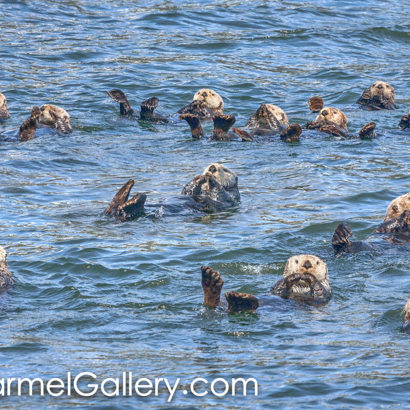 Sea otter swim cf4xs5