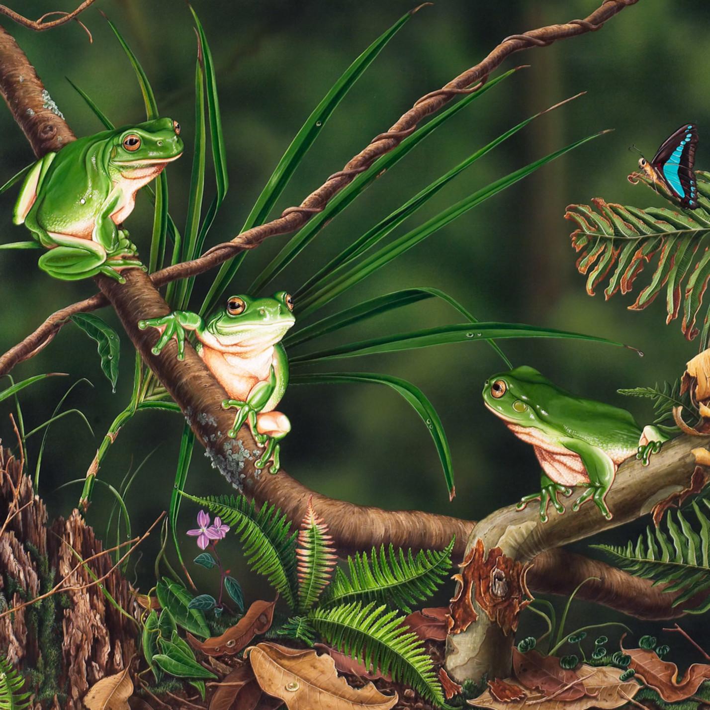 Midnight chat   common green tree frogs natalie jane parker australian native wildlife hz2bai