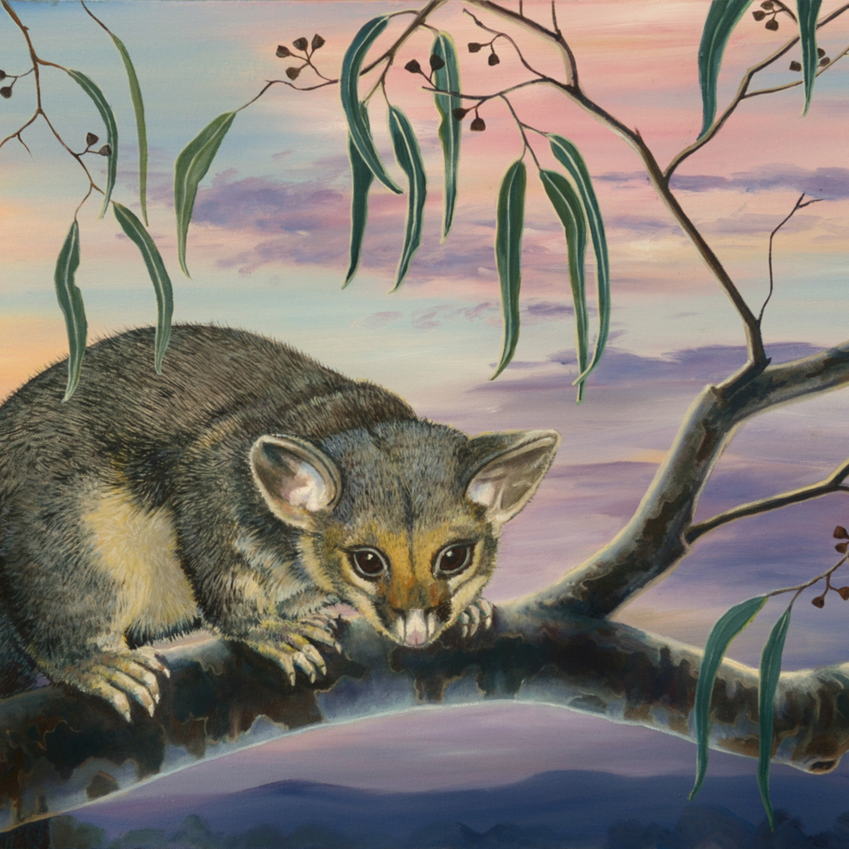 Brushtail possum possum eyed socialmedia i9aa3f