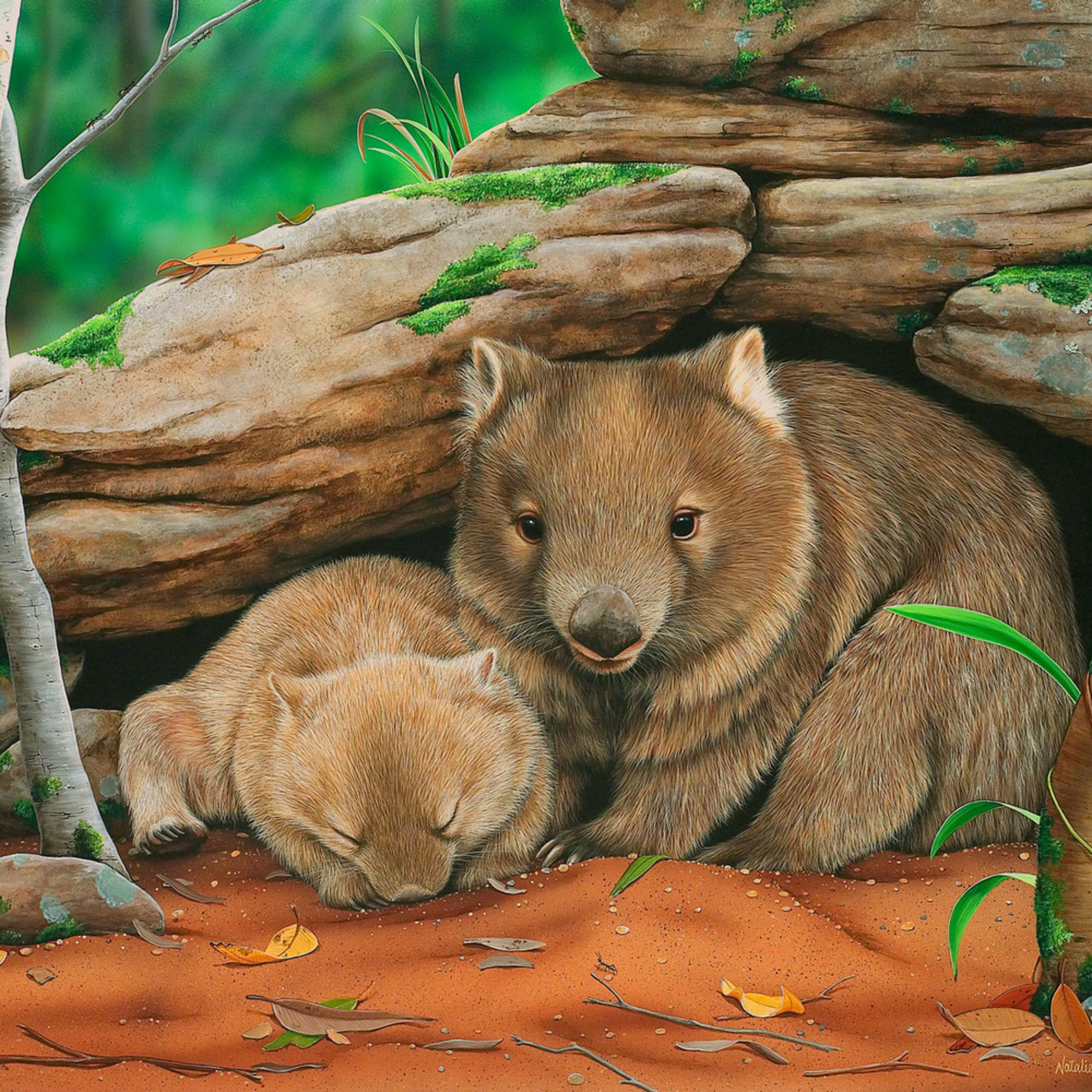 Someone to watch over me   mother and baby common wombats natalie jane parker australian native wildlife jeq39o