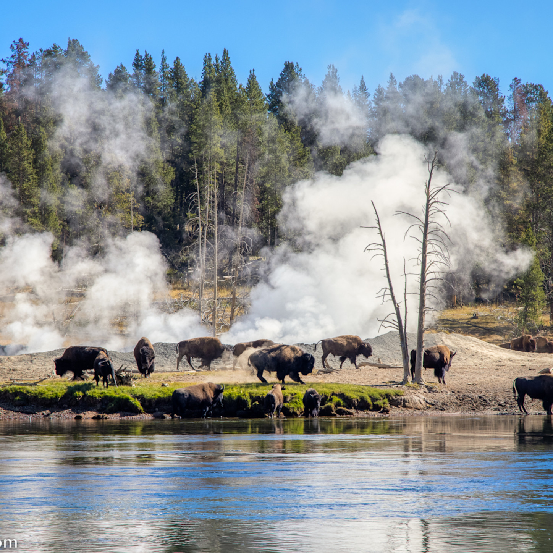 Buffalo hot springs bruscx