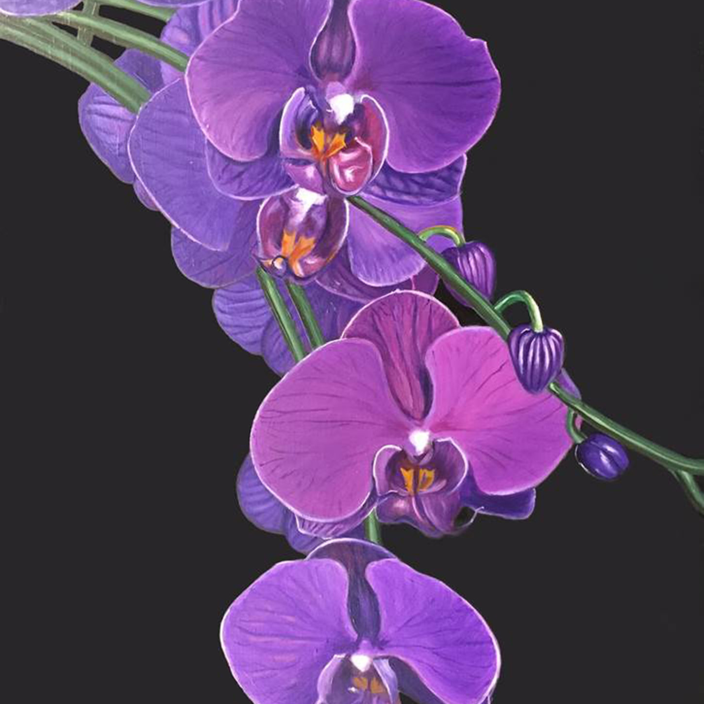 Violet orchids2 fhfhrf