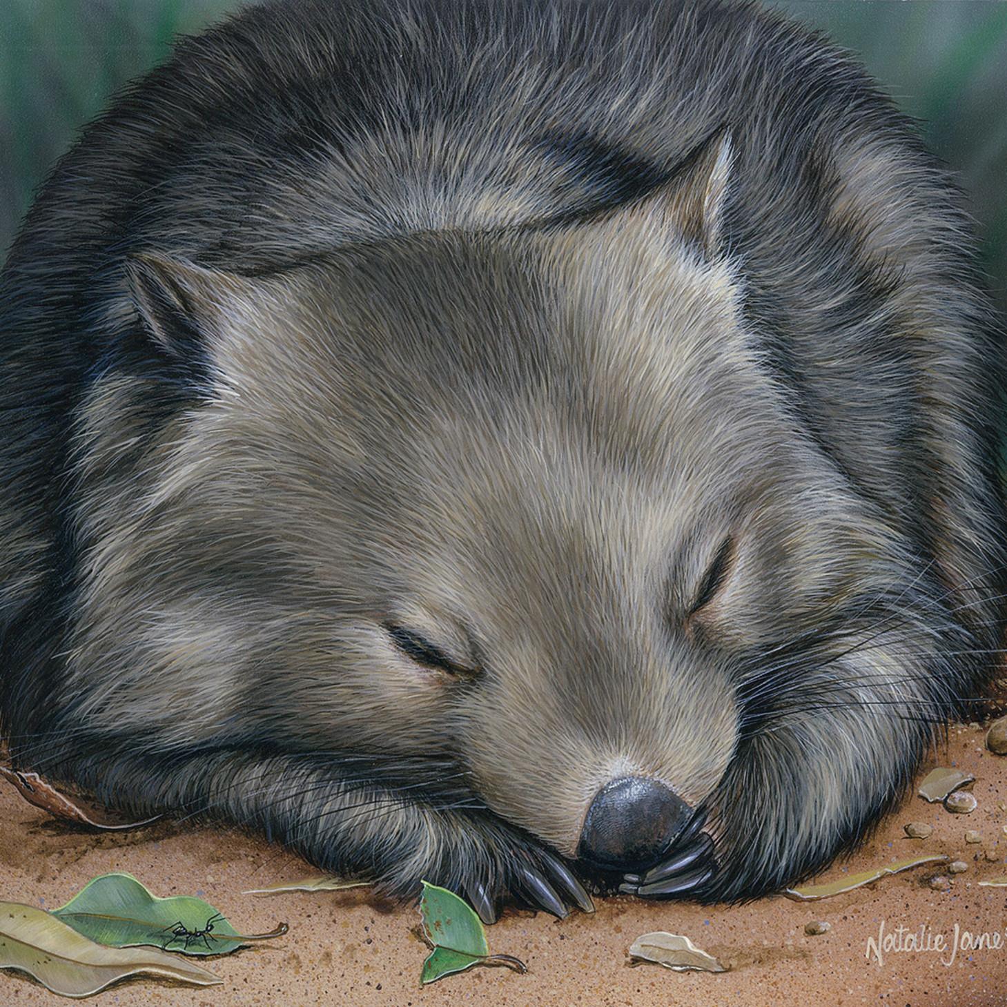 Sleeping soundly   sleeping common wombat natalie jane parker australian native wildlife z26svr