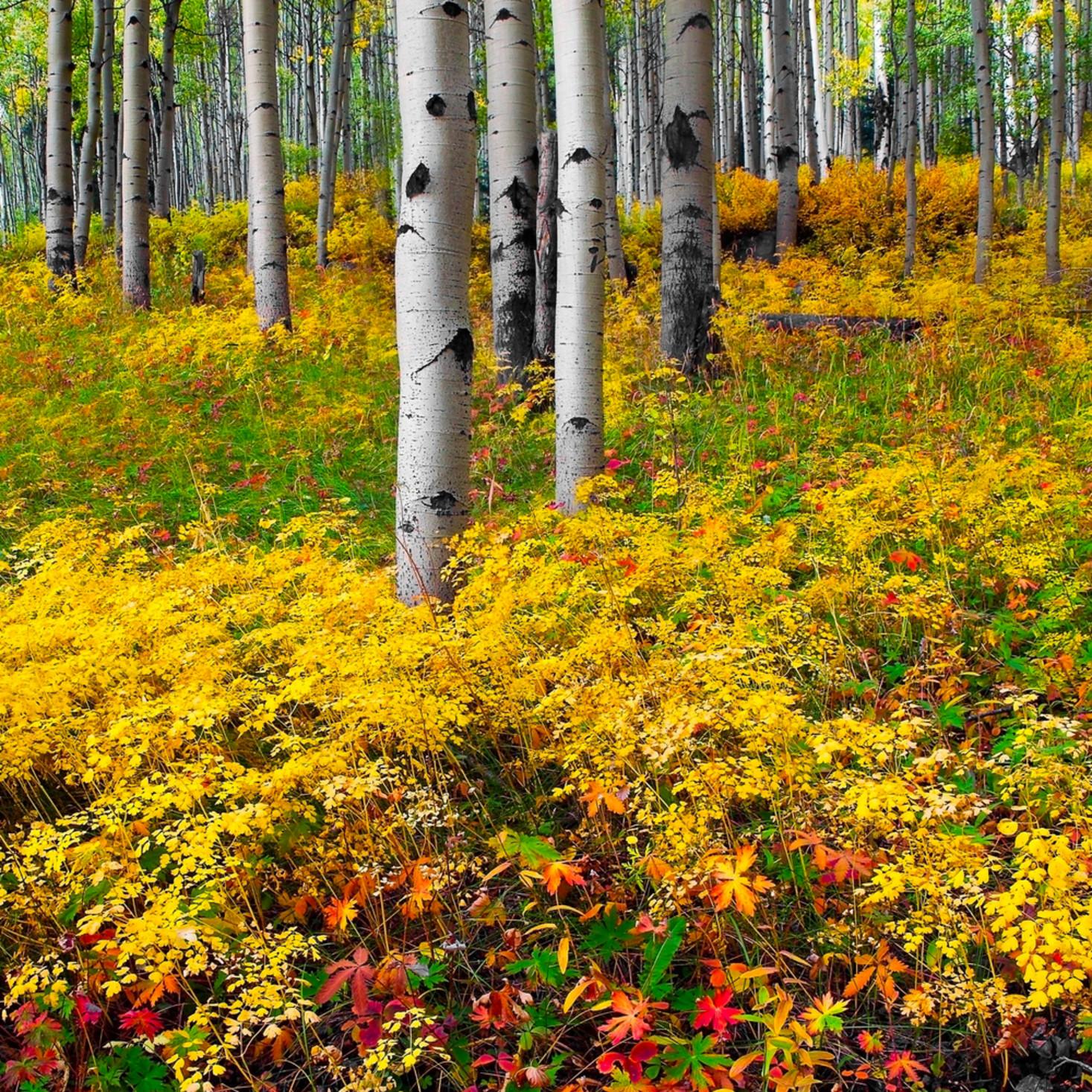 Brilliant autumn wewgrw
