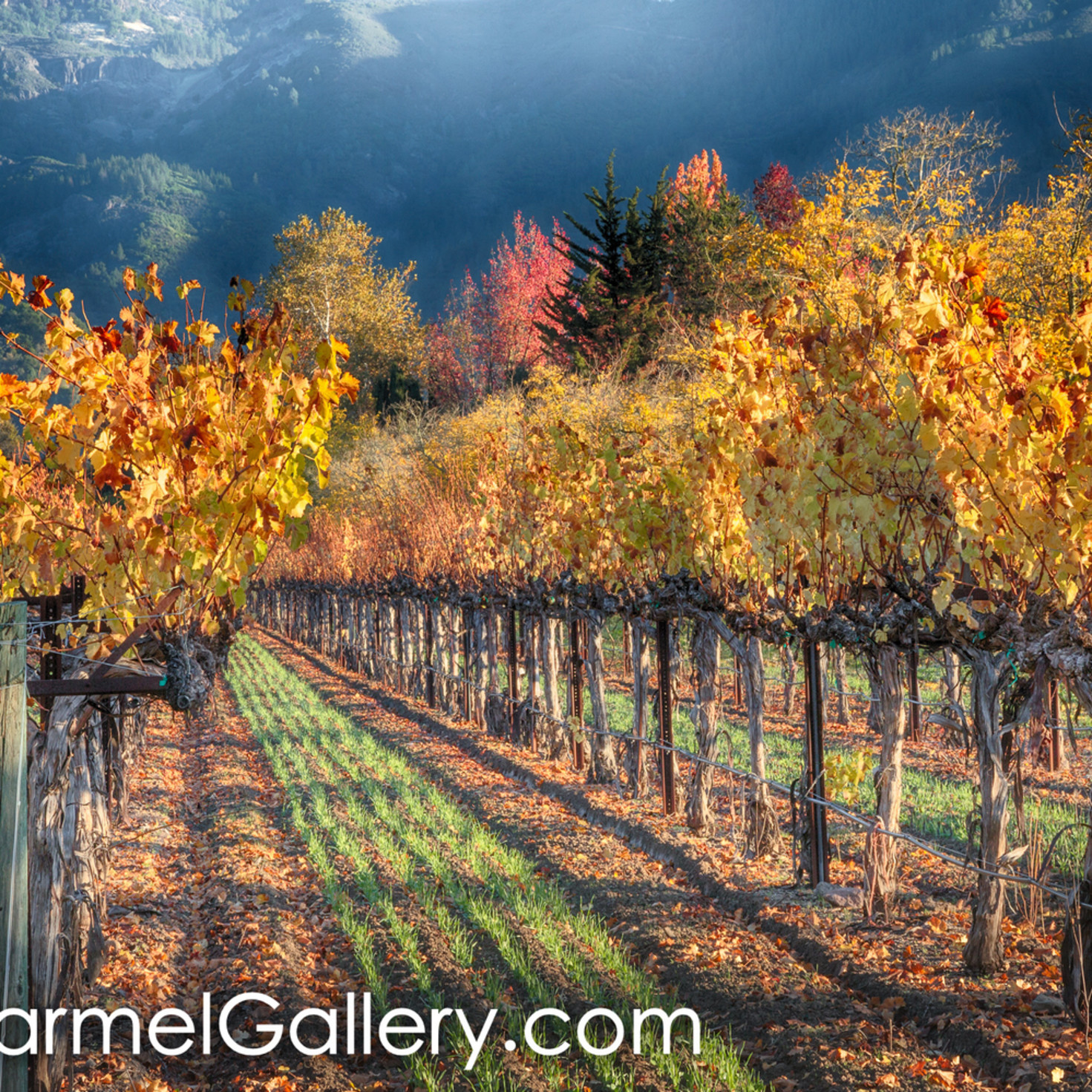 Sunlight and shadows wine country l76mbq