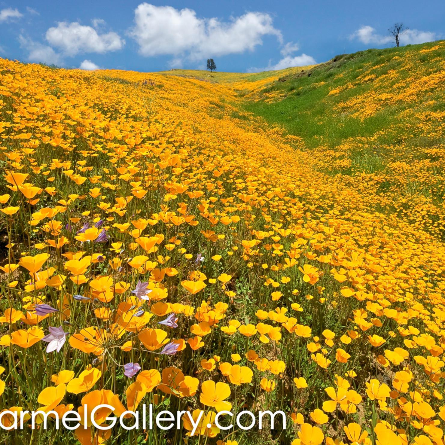 California spring zvq9ar