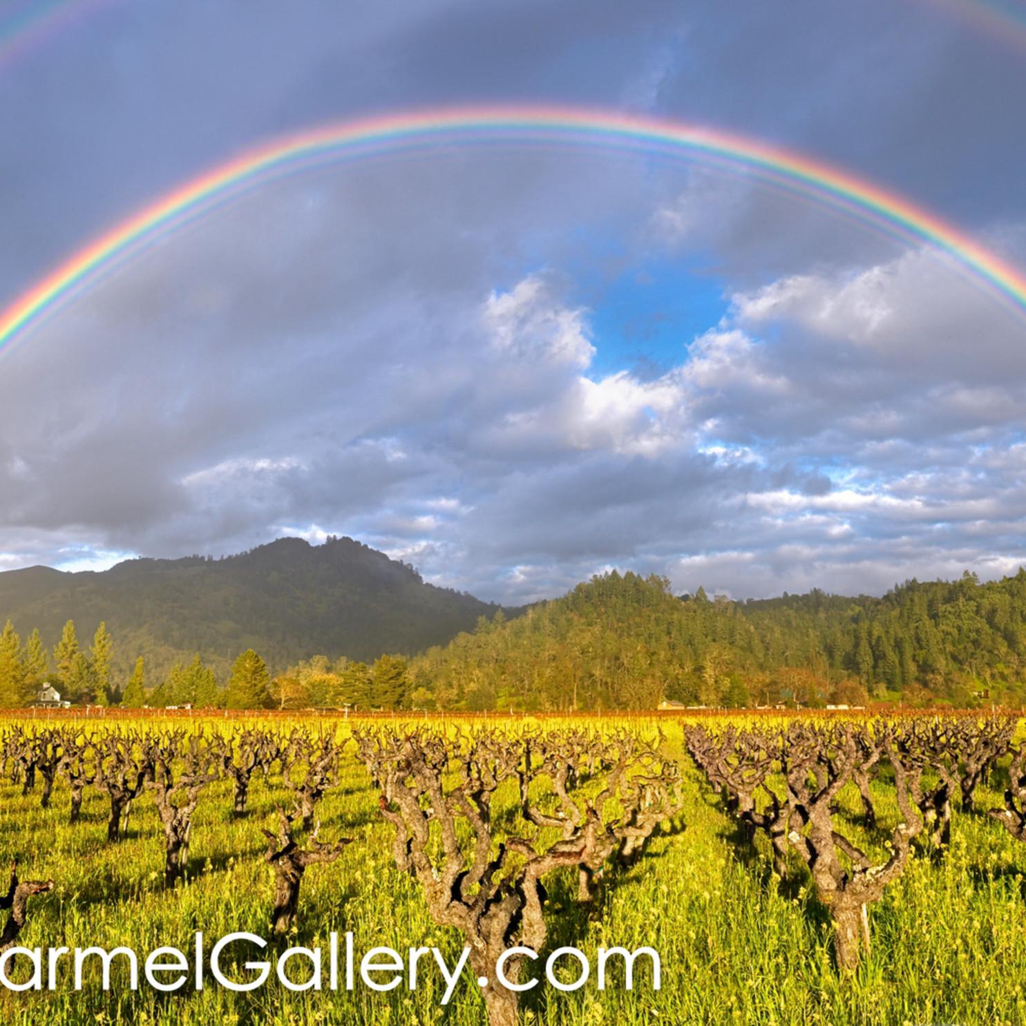 Napa valley rainbow npdlmg