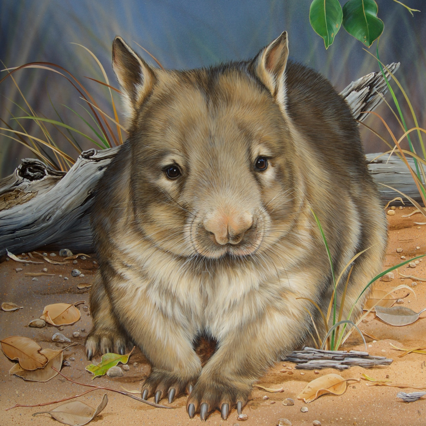 Moon light stroll northern hairy nosed wombat natalie jane parker april 2016 ehucwl