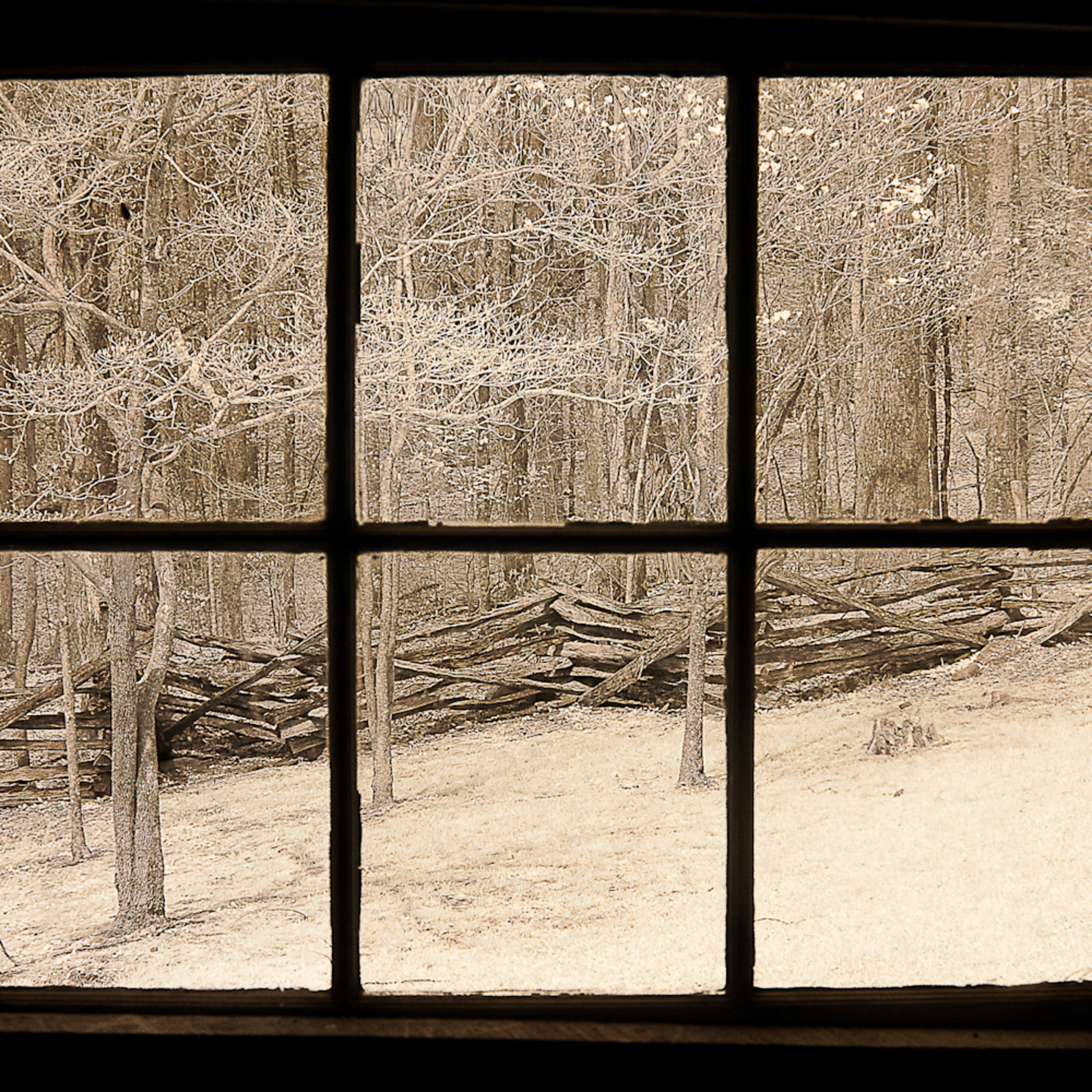 Window view tennessee 1 tychrz