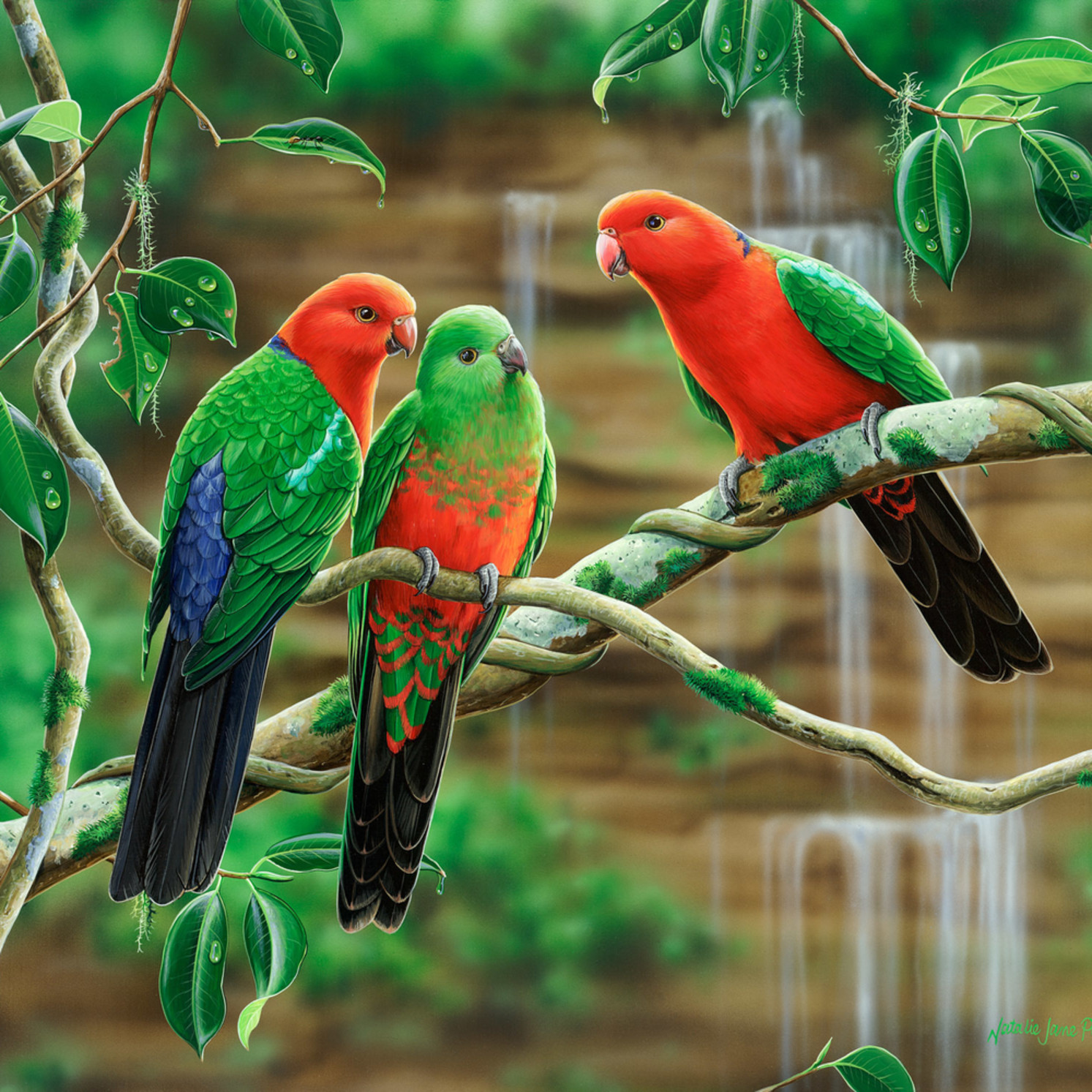 Kings of the forest   king parrots natalie jane parker australian native wildlife fb7jjs