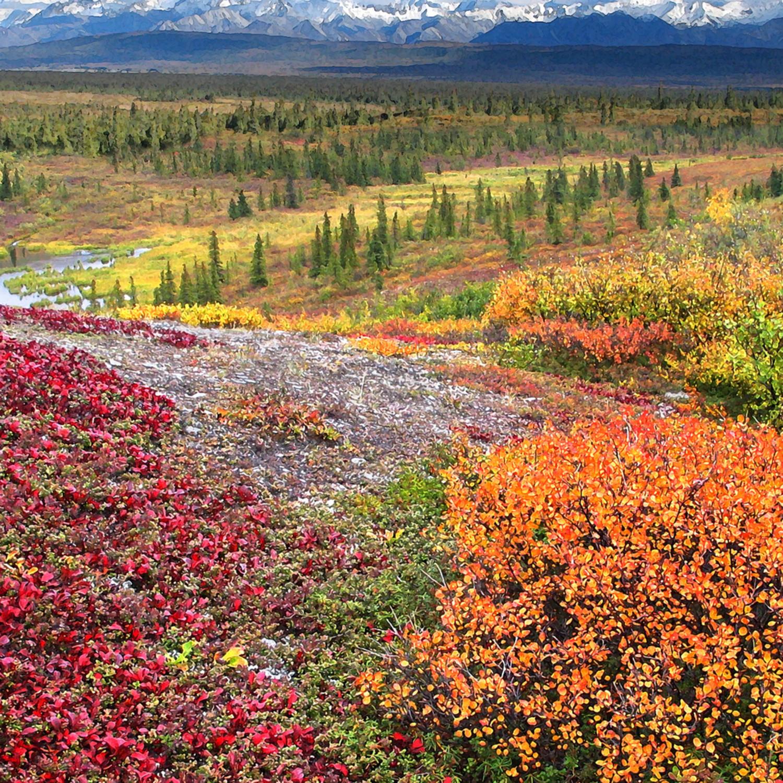 Patterns of autumn khcu2o